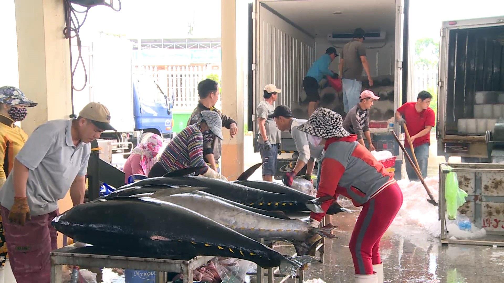 Giáp Tết: Ngư dân Phú Yên có tiền sắm tết vì trúng đậm cá ngừ đại dương  - Ảnh 6.