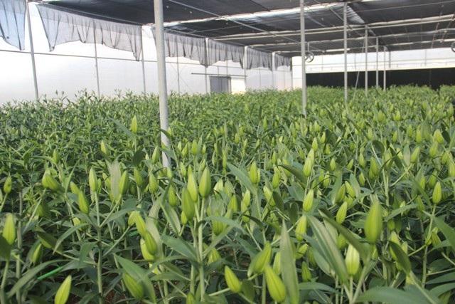 Quảng Trị quyết biến đỉnh Sa Mù thành tiểu Đà Lạt nhờ nông nghiệp công nghệ cao - Ảnh 5.