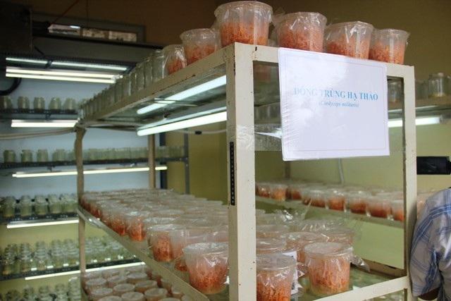 Quảng Trị quyết biến đỉnh Sa Mù thành tiểu Đà Lạt nhờ nông nghiệp công nghệ cao - Ảnh 3.