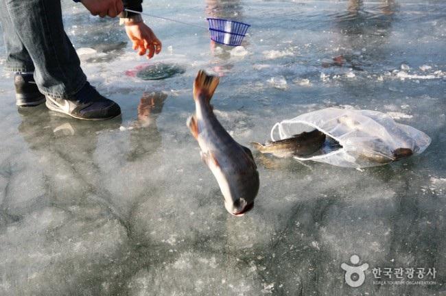 """Bất chấp cái lạnh dưới 0 độ C, du khách vẫn """"đổ xô"""" đập vỡ băng để câu cá - Ảnh 4."""