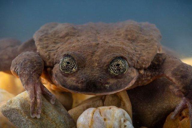 Chú ếch cô đơn nhất thế giới, cuối cùng đã có một cuộc hẹn hò! - Ảnh 1.