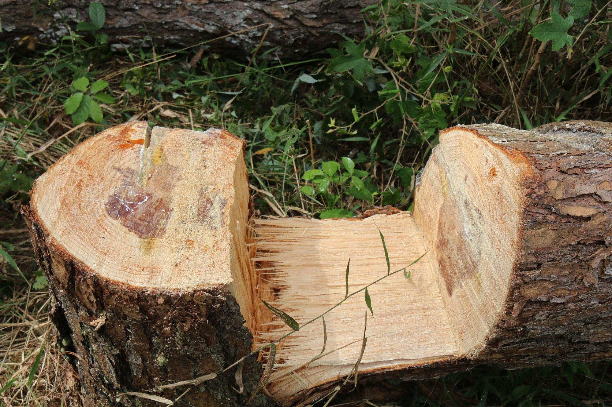 Dự án vừa bị thu hồi, rừng ngay lập tức bị bức tử - Ảnh 5.