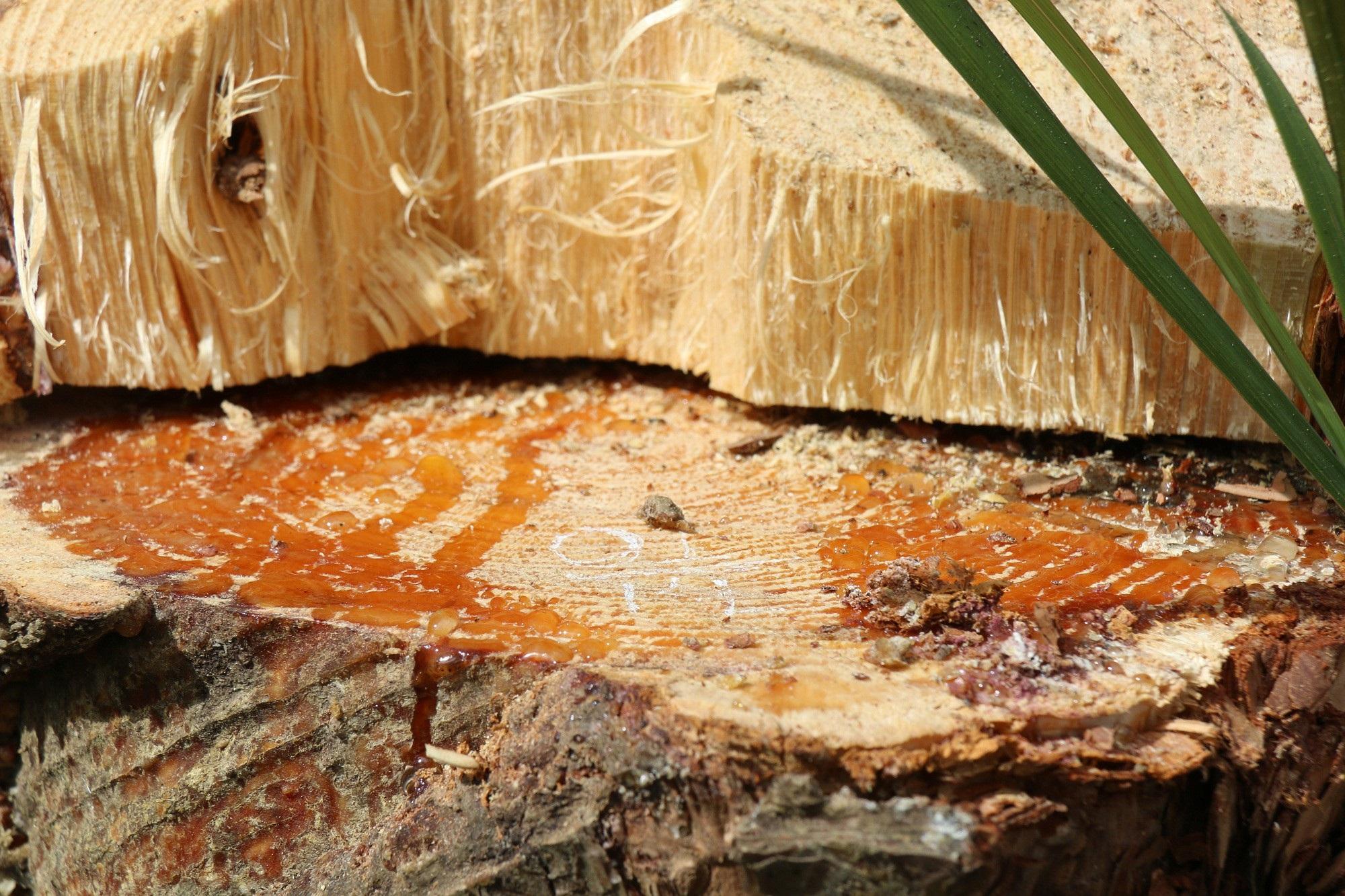 Dự án vừa bị thu hồi, rừng ngay lập tức bị bức tử - Ảnh 3.
