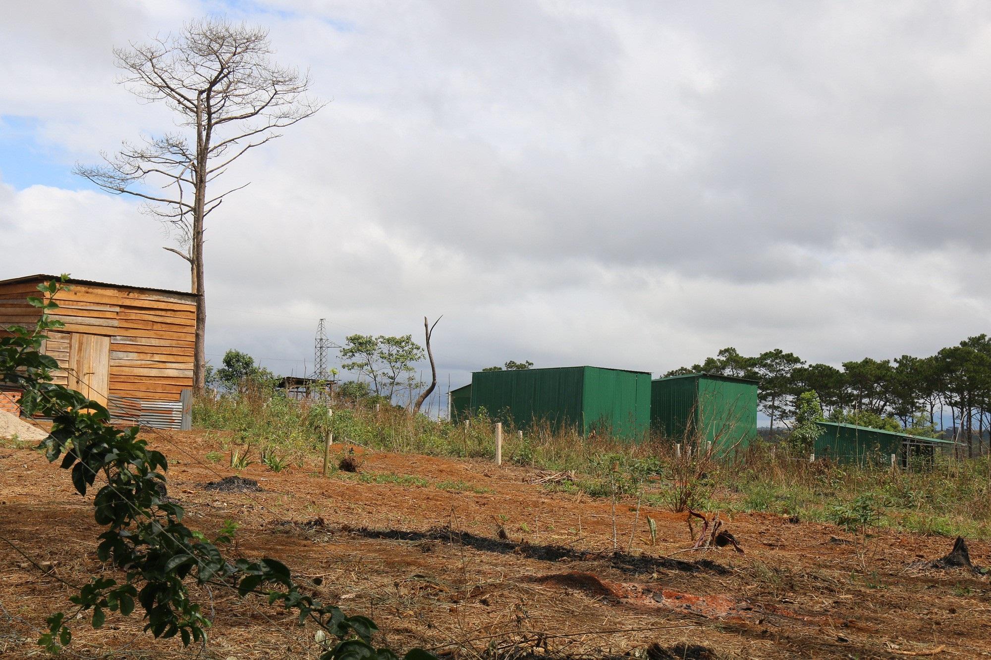 Dự án vừa bị thu hồi, rừng ngay lập tức bị bức tử - Ảnh 4.