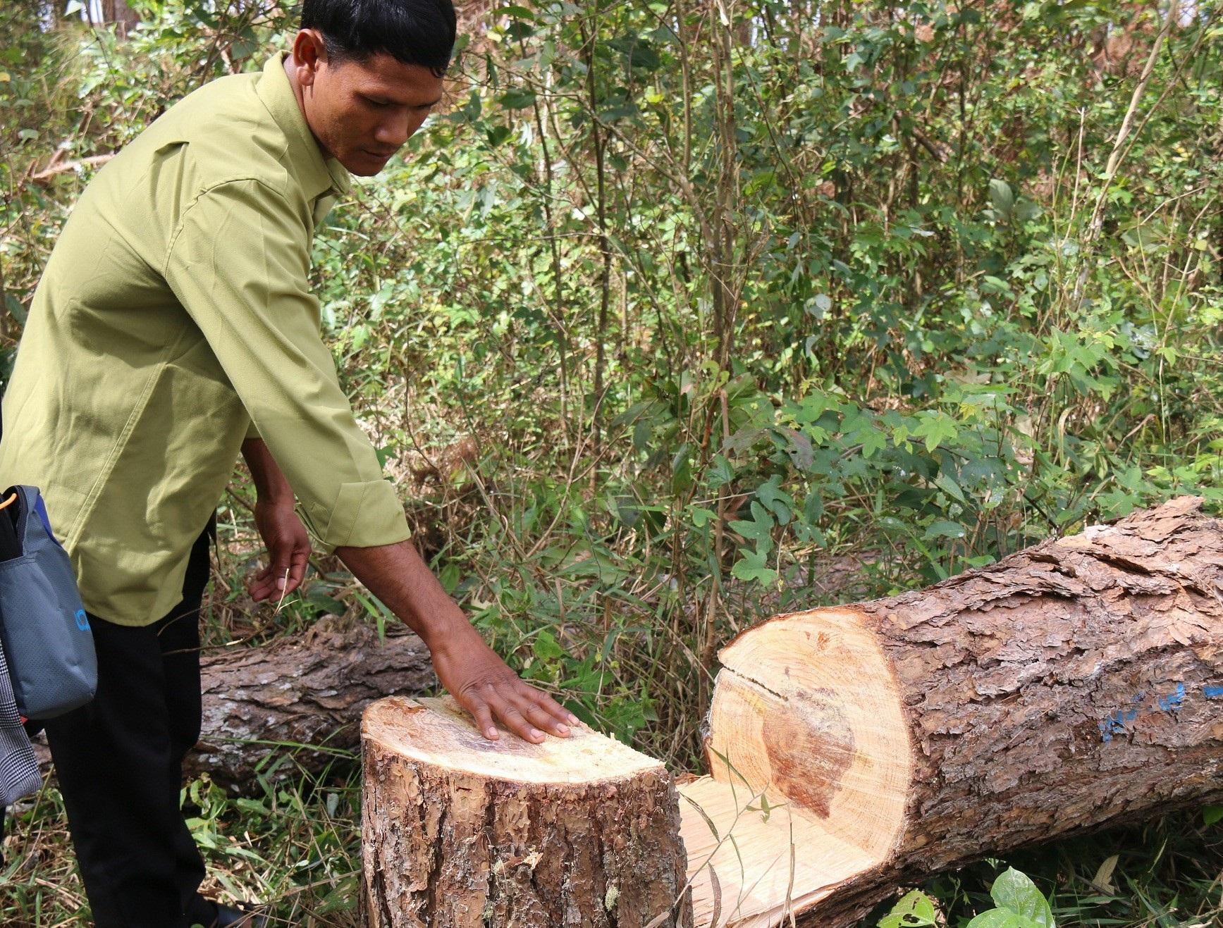 Dự án vừa bị thu hồi, rừng ngay lập tức bị bức tử - Ảnh 6.