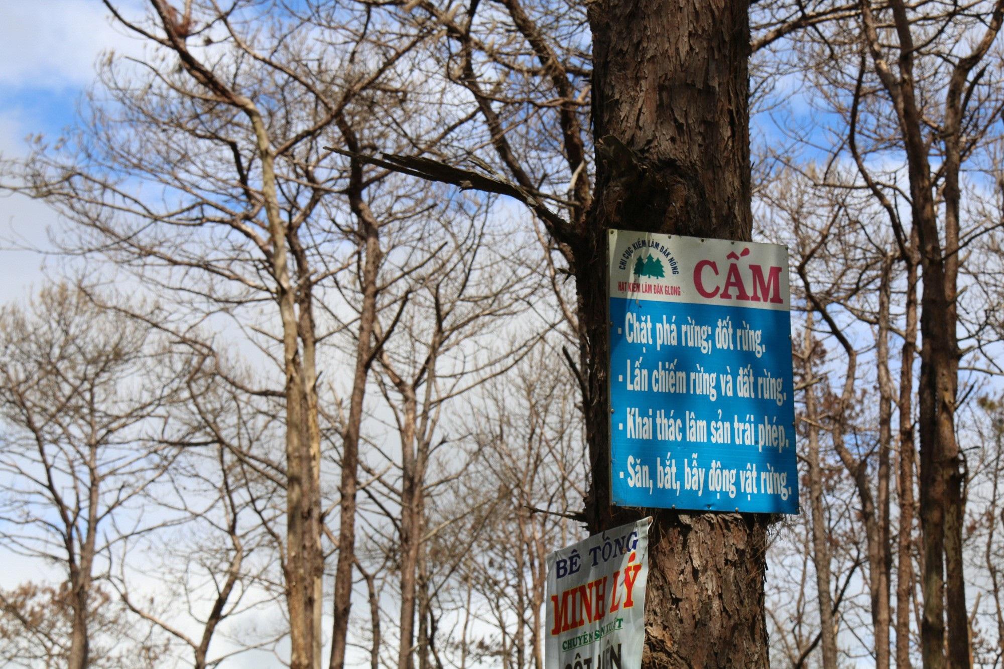 Dự án vừa bị thu hồi, rừng ngay lập tức bị bức tử - Ảnh 8.