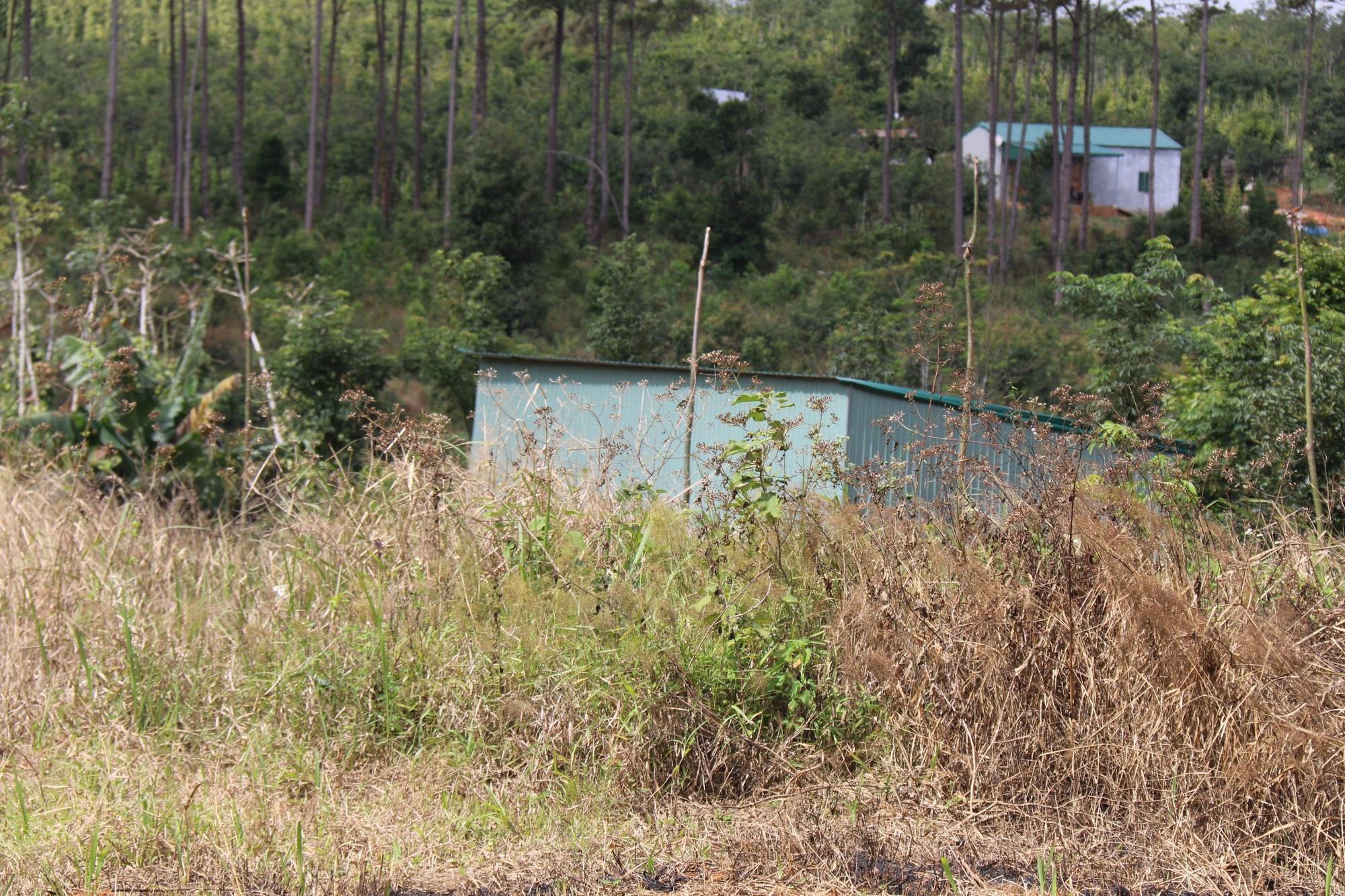 Dự án vừa bị thu hồi, rừng ngay lập tức bị bức tử - Ảnh 9.
