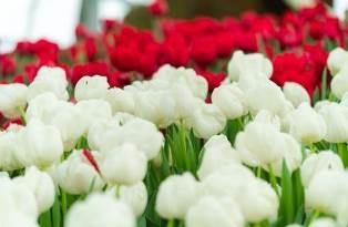 Thưởng lãm mùa xuân châu Âu tại Vinpearl Land Nha Trang - Ảnh 1.