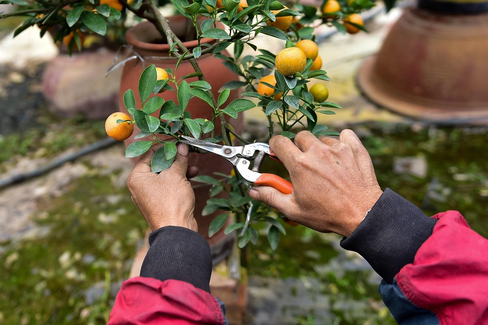 Độc đáo: Quất lọ bonsai hút khách chơi Tết - Ảnh 12.