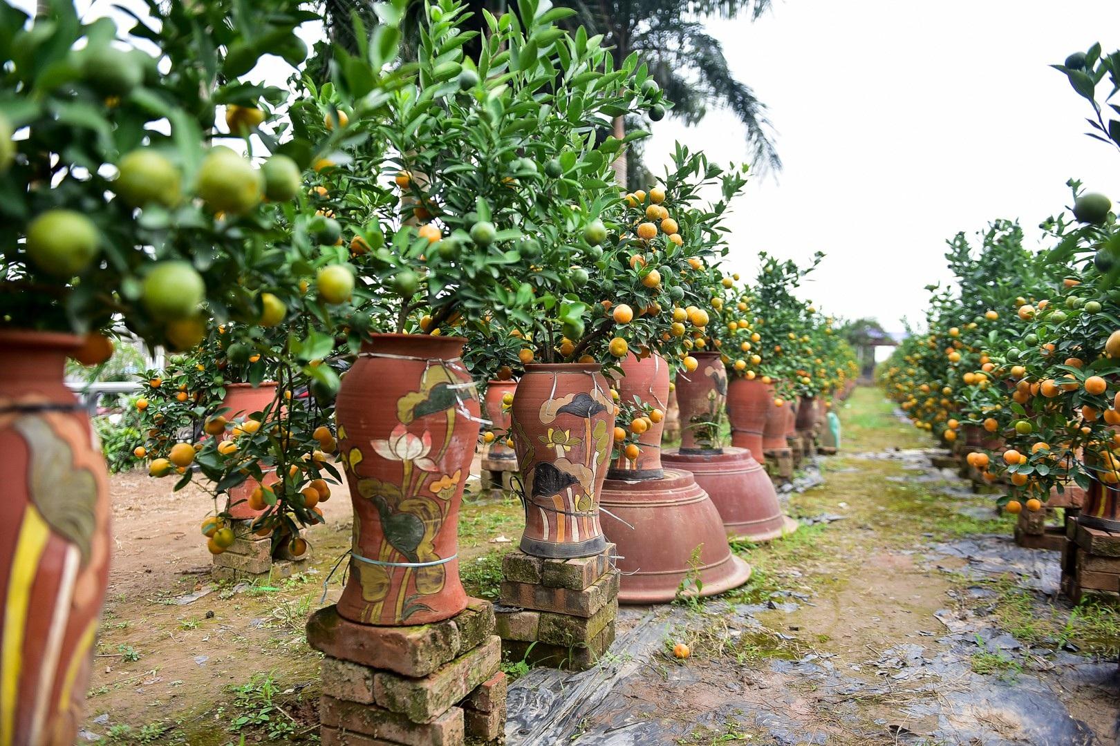 Độc đáo: Quất lọ bonsai hút khách chơi Tết - Ảnh 13.
