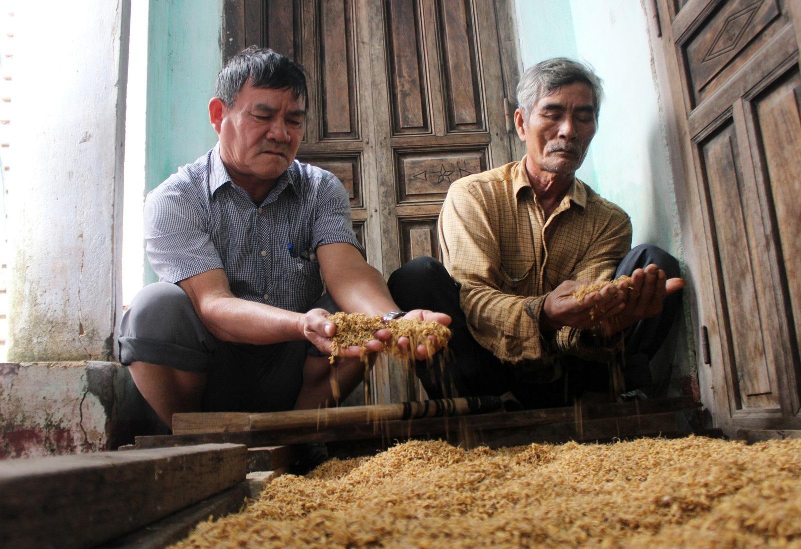 Hơn 330 tấn lúa giống đành đổ bỏ vì mưa lũ - Ảnh 5.