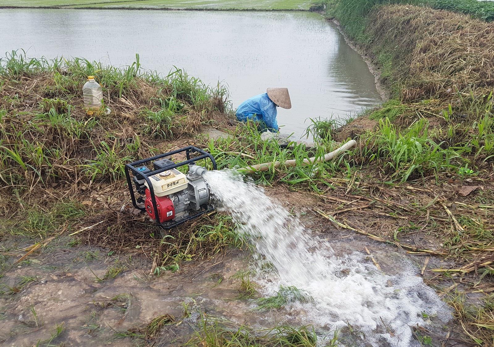 Hơn 330 tấn lúa giống đành đổ bỏ vì mưa lũ - Ảnh 2.