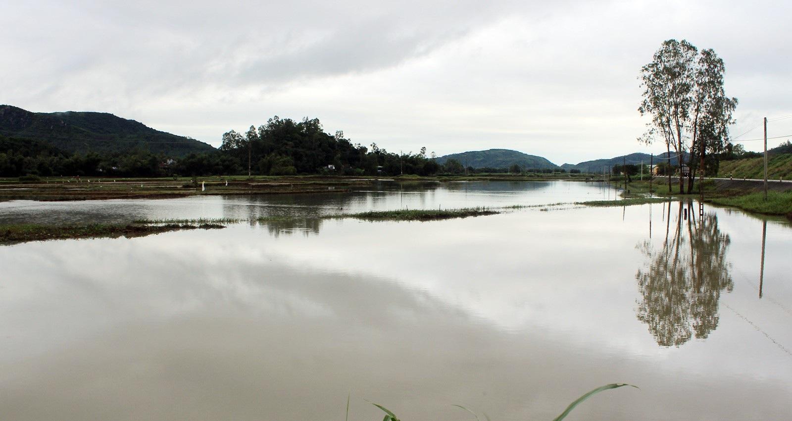 Hơn 330 tấn lúa giống đành đổ bỏ vì mưa lũ - Ảnh 6.