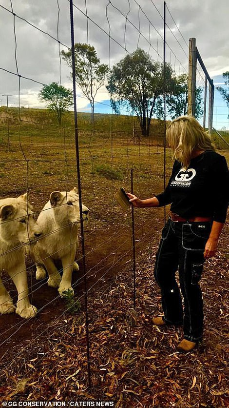 Đây là khu bảo tồn sư tử phi lợi nhuận