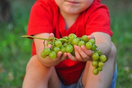Bé 3 tuổi qua đời vì truyền thống nuốt nho mừng năm mới ở Tây Ban Nha - Ảnh 1.