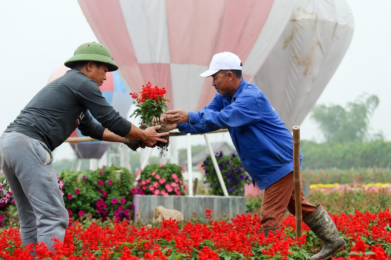Vườn hoa hình cúp vô địch khổng lồ cổ vũ đội tuyển Việt Nam - Ảnh 12.