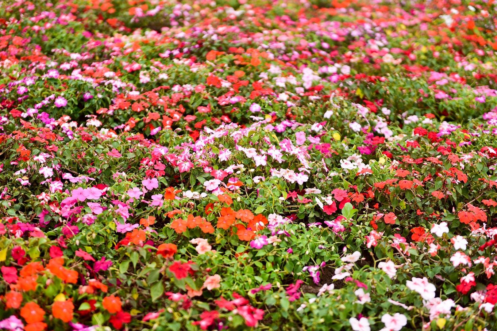 Vườn hoa hình cúp vô địch khổng lồ cổ vũ đội tuyển Việt Nam - Ảnh 5.