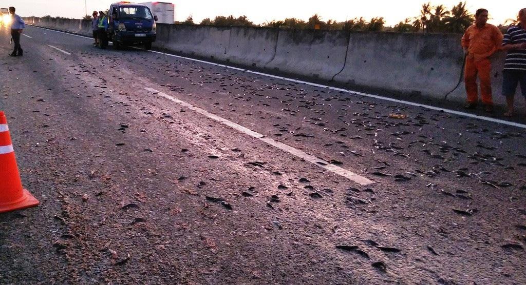 Xe tải lật nhào trên cao tốc, hàng ngàn con cá rải khắp mặt đường - Ảnh 2.