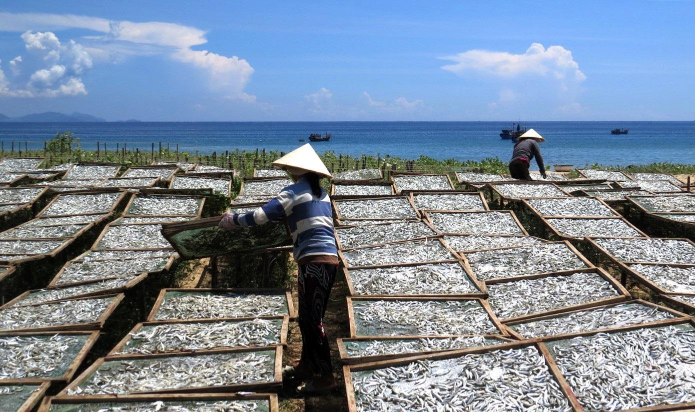 Giáp Tết: Làng nghề nước mắm Phú Yên nhộn nhịp vào vụ - Ảnh 1.