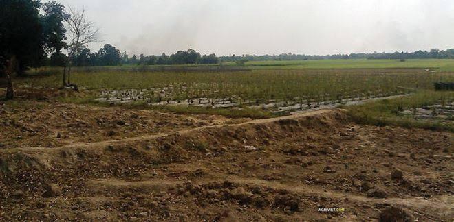 Bắc Ninh xin chuyển mục đích sử dụng gần 81 ha đất trồng lúa để thực hiện dự án BT - Ảnh 1.