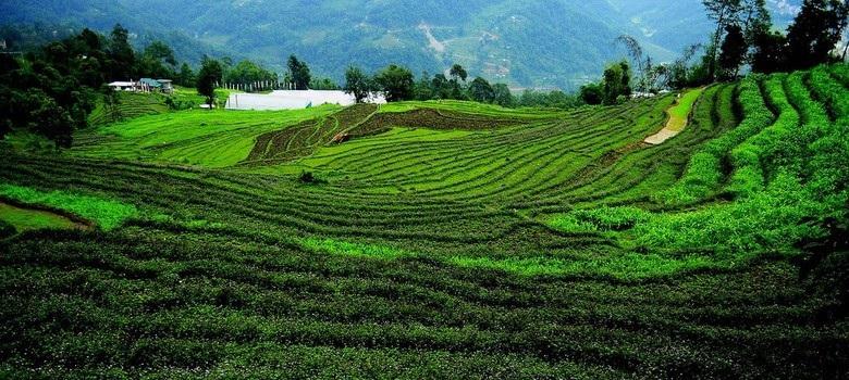 """Điều kỳ diệu ở Bang đầu tiên của Ấn Độ """"hữu cơ hóa"""" 100% nền nông nghiệp - Ảnh 4."""