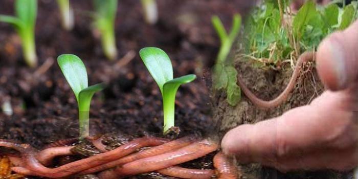 """Điều kỳ diệu ở Bang đầu tiên của Ấn Độ """"hữu cơ hóa"""" 100% nền nông nghiệp - Ảnh 2."""