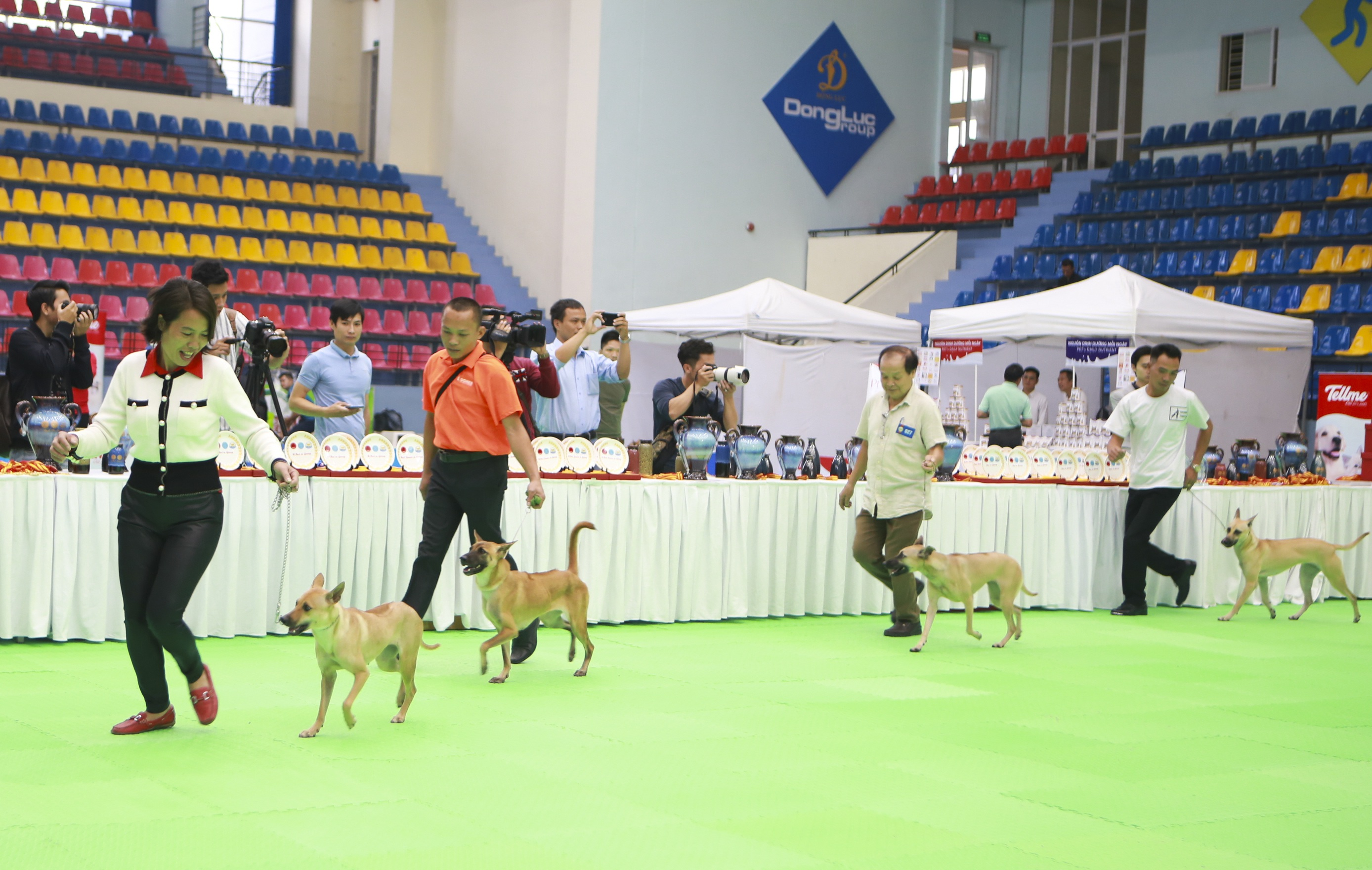 Hơn 200 chú chó quý tộc giá nghìn USD thi tài giành danh hiệu tại Hà Nội - 1