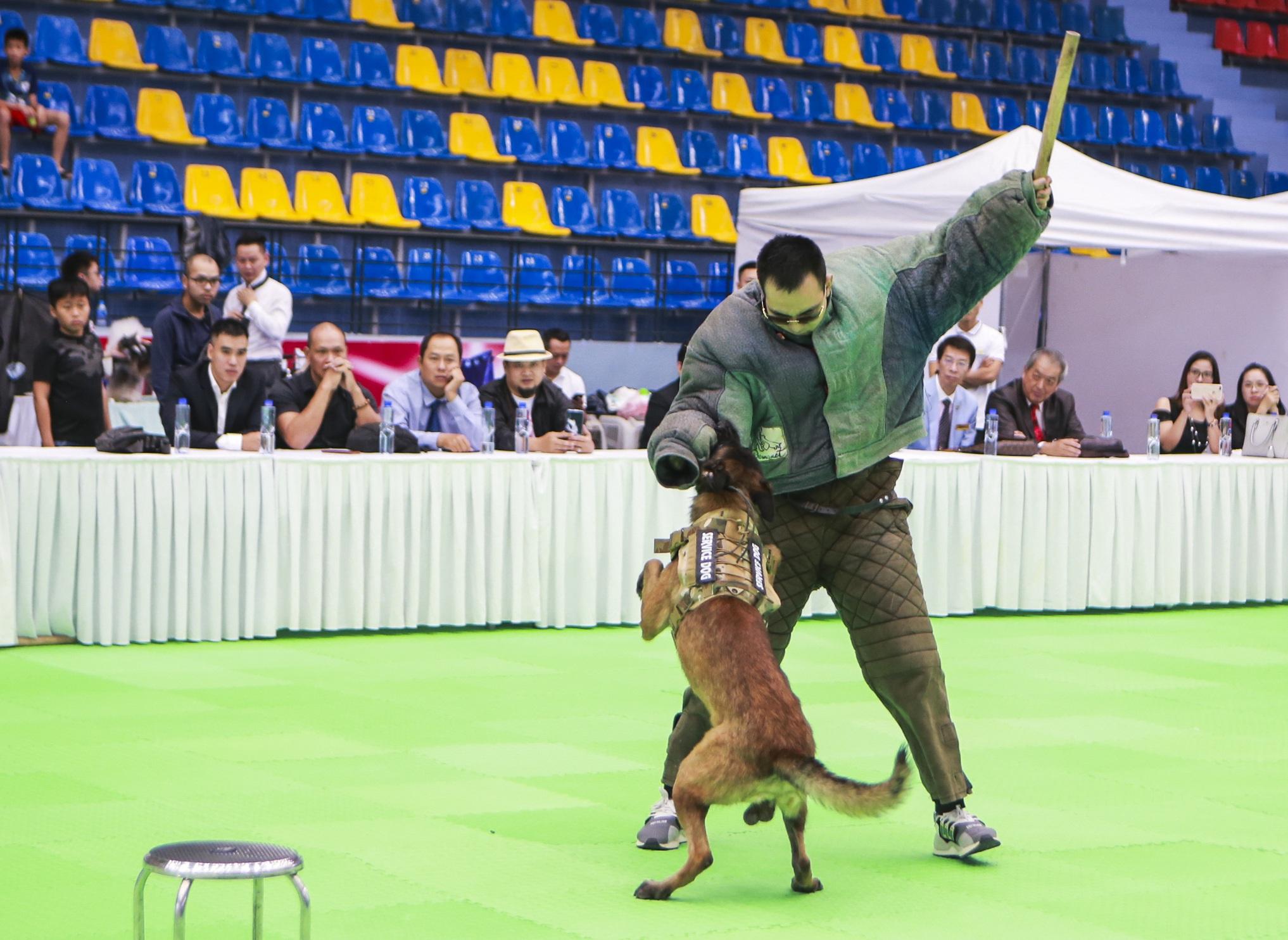 Hơn 200 chú chó quý tộc giá nghìn USD thi tài giành danh hiệu tại Hà Nội - 13