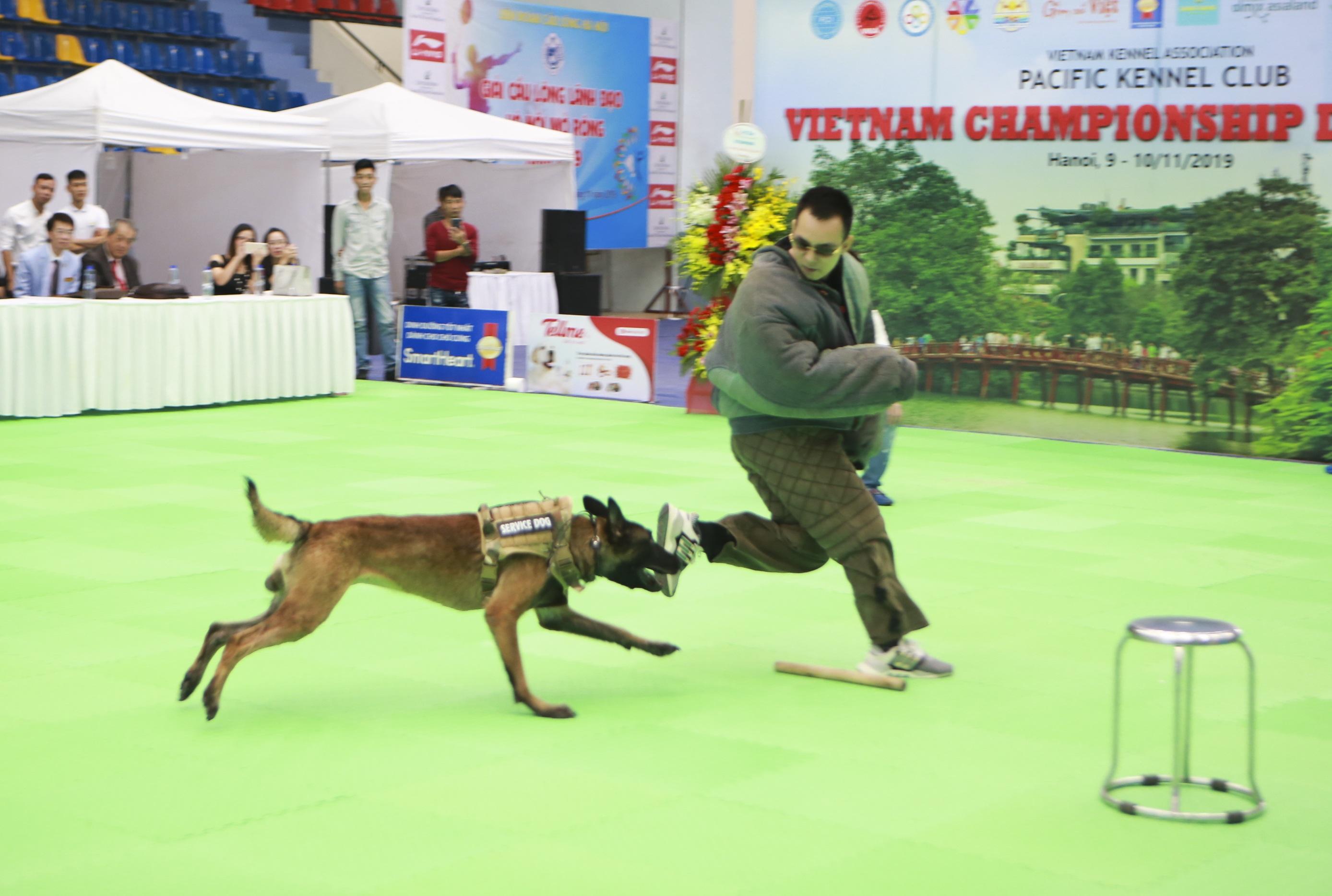 Hơn 200 chú chó quý tộc giá nghìn USD thi tài giành danh hiệu tại Hà Nội - 14