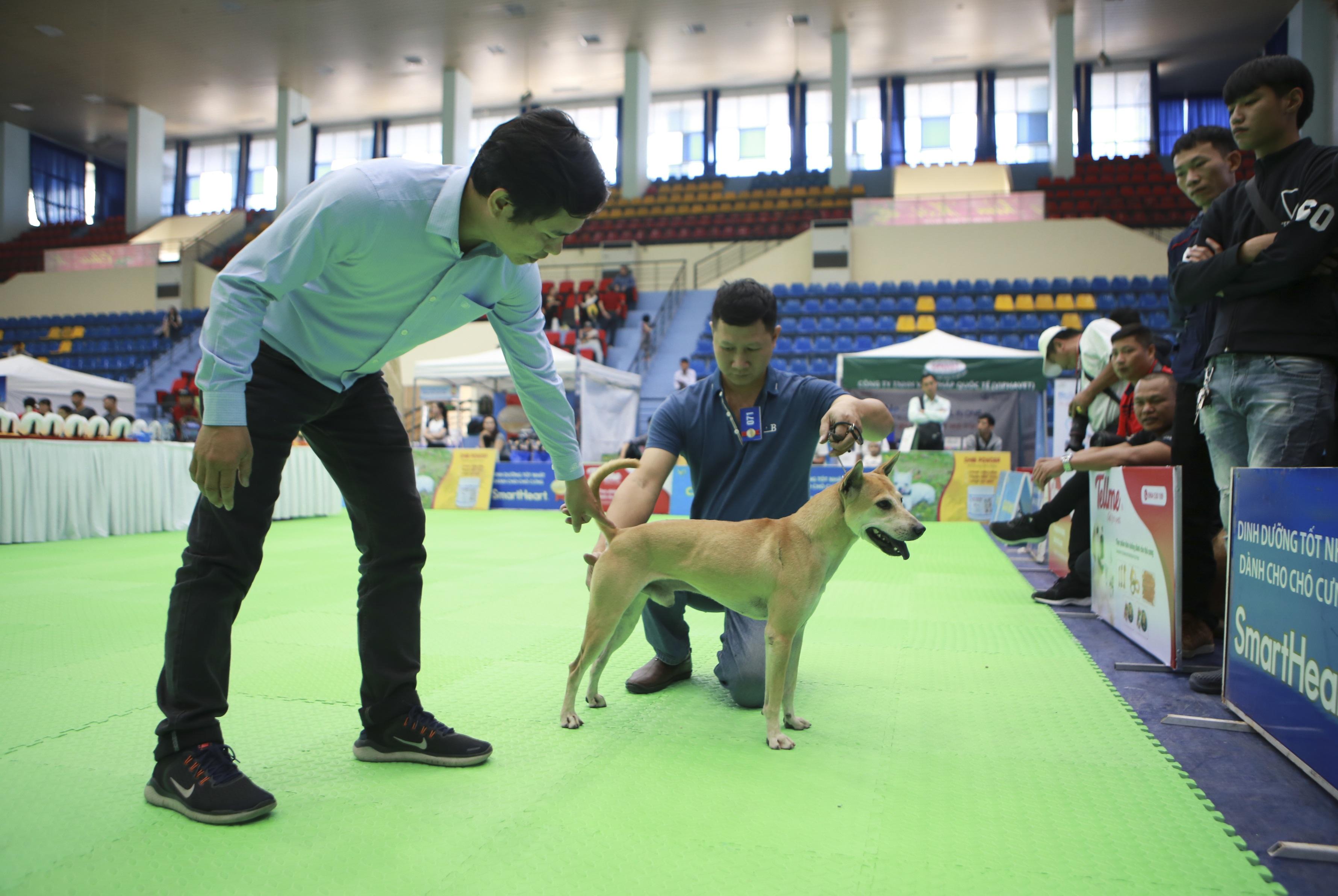 Hơn 200 chú chó quý tộc giá nghìn USD thi tài giành danh hiệu tại Hà Nội - 15