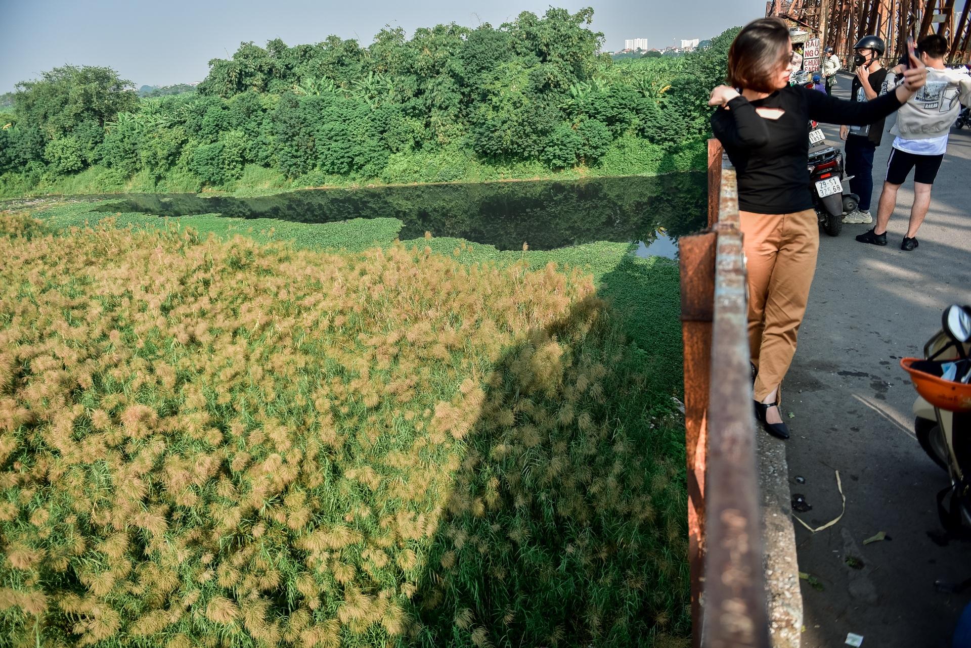 Lạc vào cánh đồng cỏ lau đẹp như xứ sở thần tiên dưới chân cầu Long Biên - 5