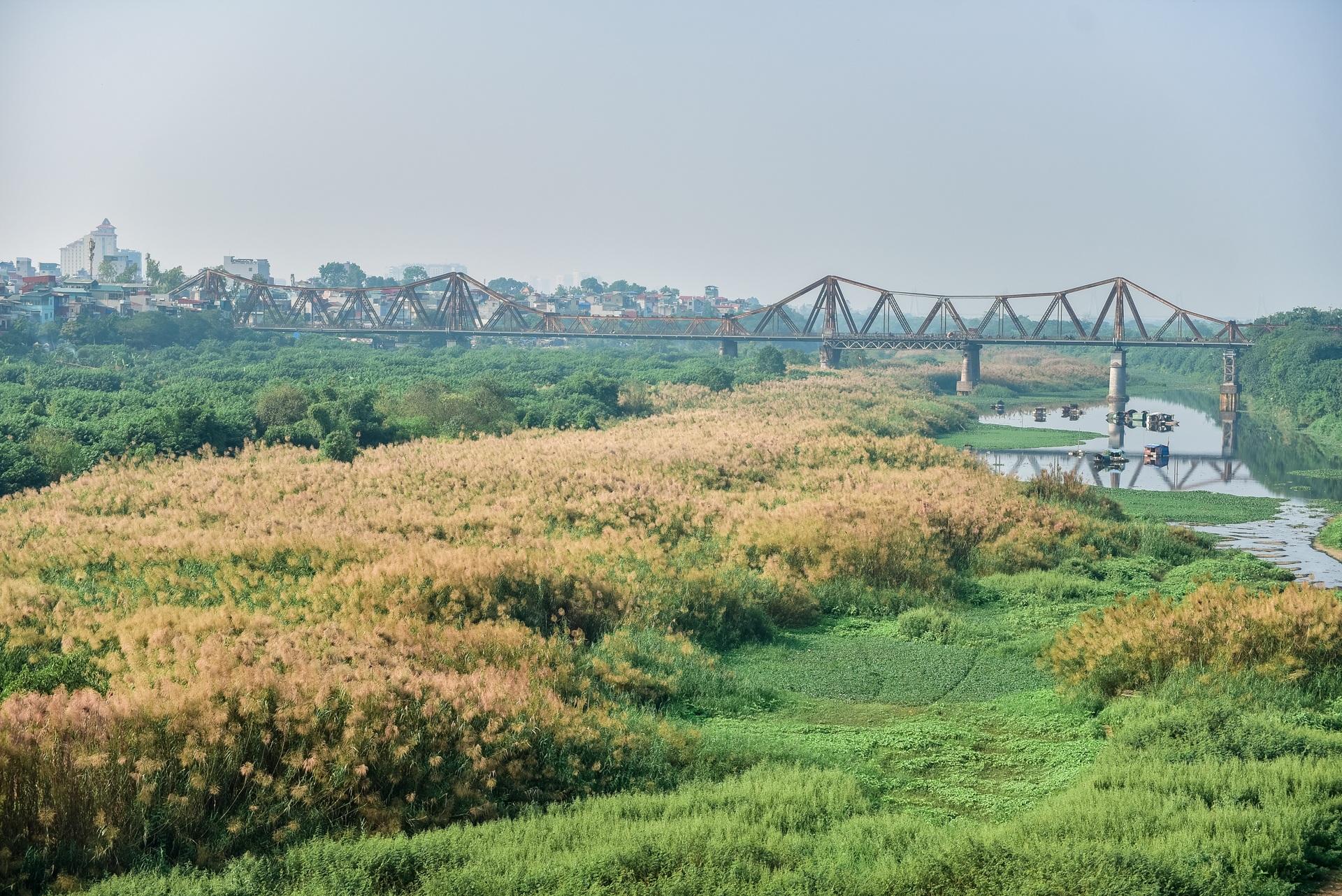 Lạc vào cánh đồng cỏ lau đẹp như xứ sở thần tiên dưới chân cầu Long Biên - 16