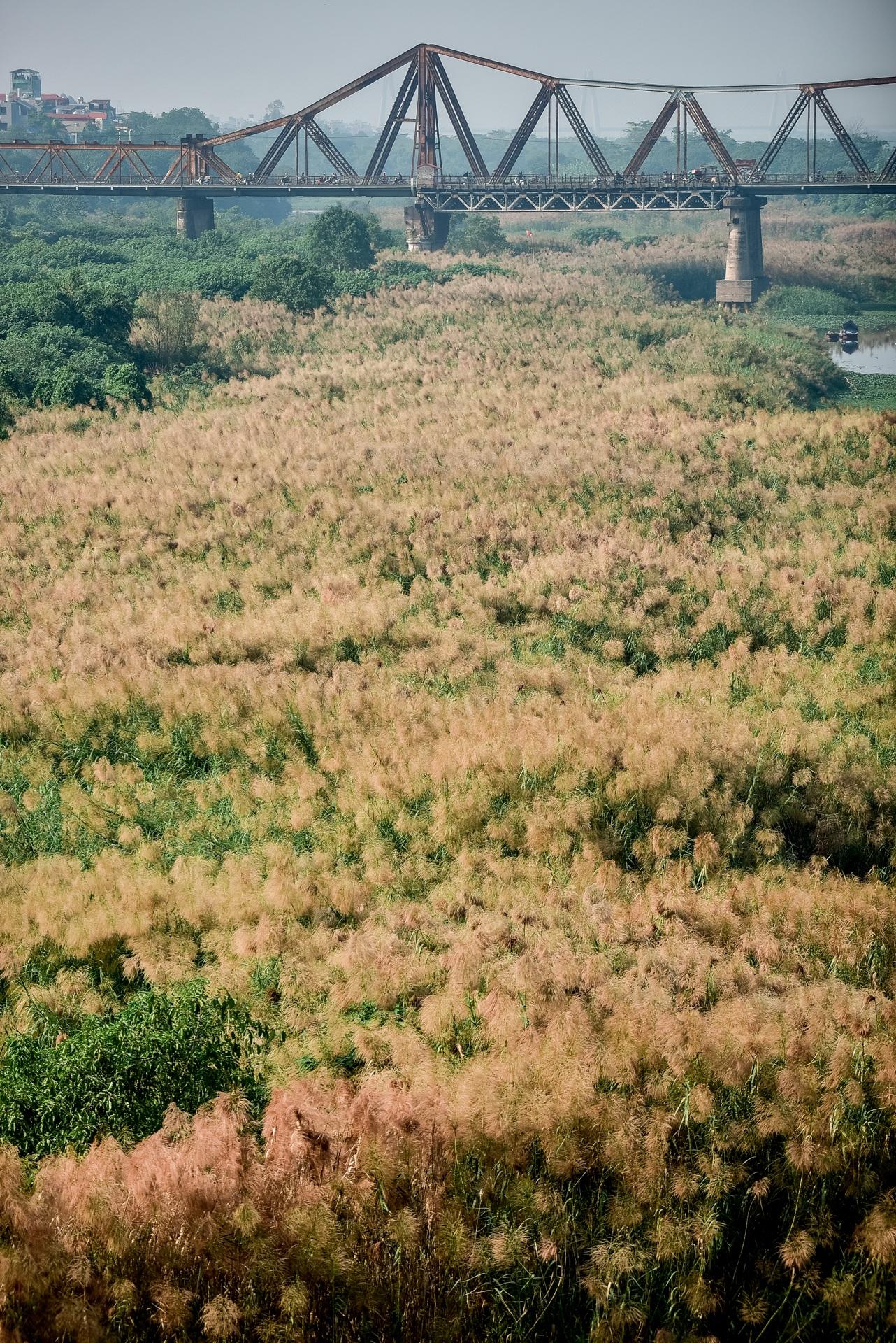 Lạc vào cánh đồng cỏ lau đẹp như xứ sở thần tiên dưới chân cầu Long Biên - 8