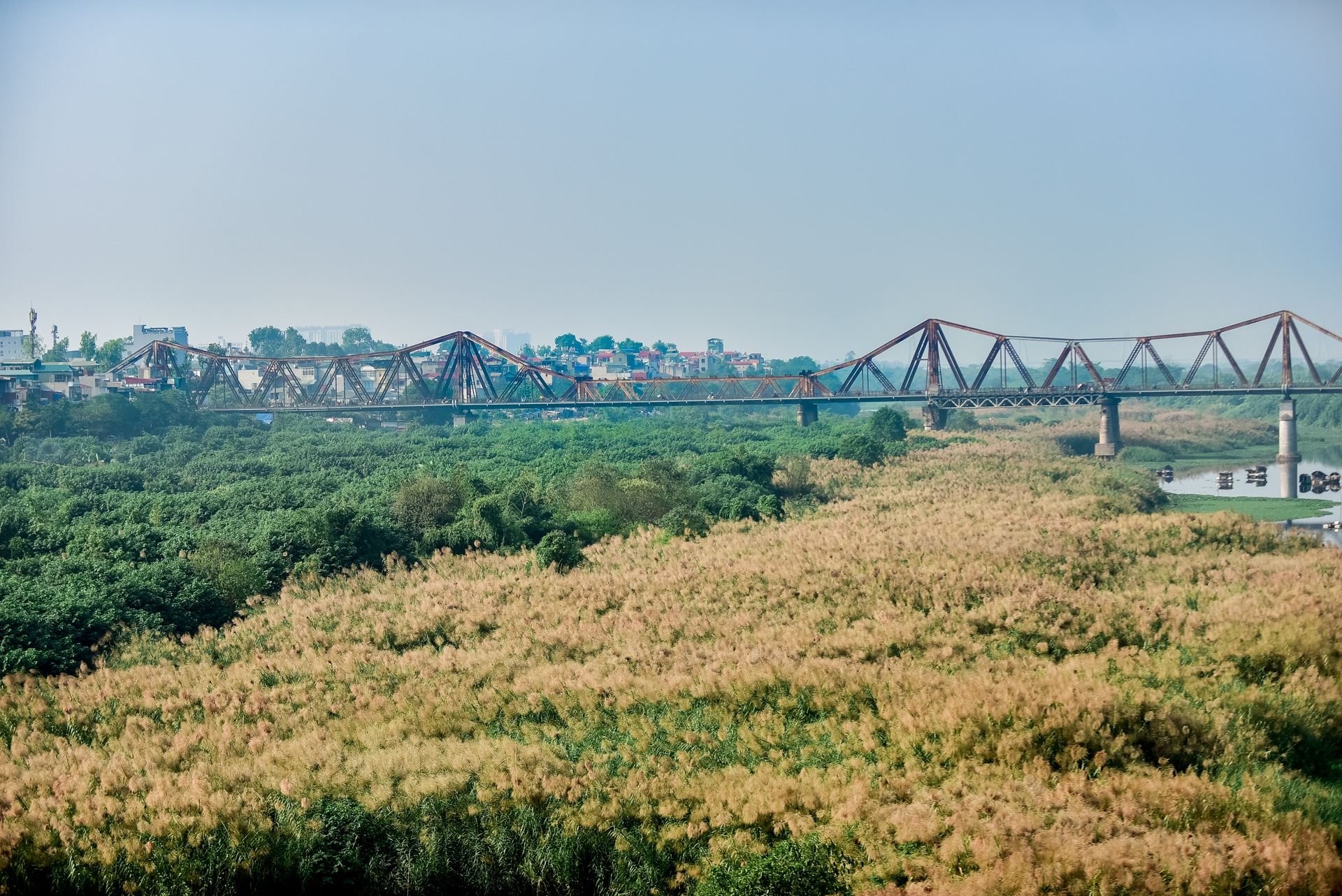 Lạc vào cánh đồng cỏ lau đẹp như xứ sở thần tiên dưới chân cầu Long Biên - 9
