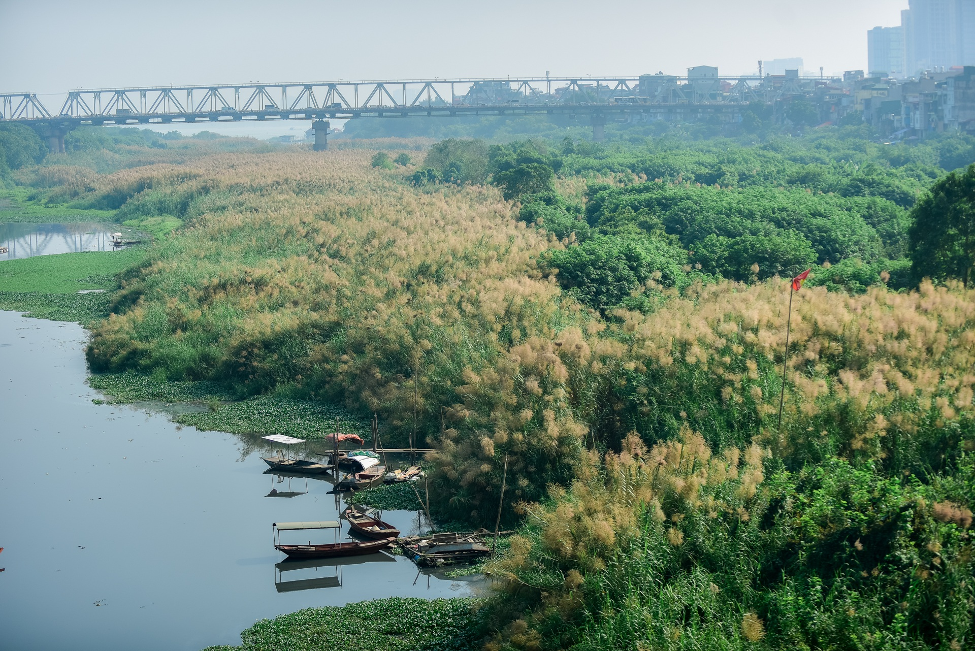 Lạc vào cánh đồng cỏ lau đẹp như xứ sở thần tiên dưới chân cầu Long Biên - 4
