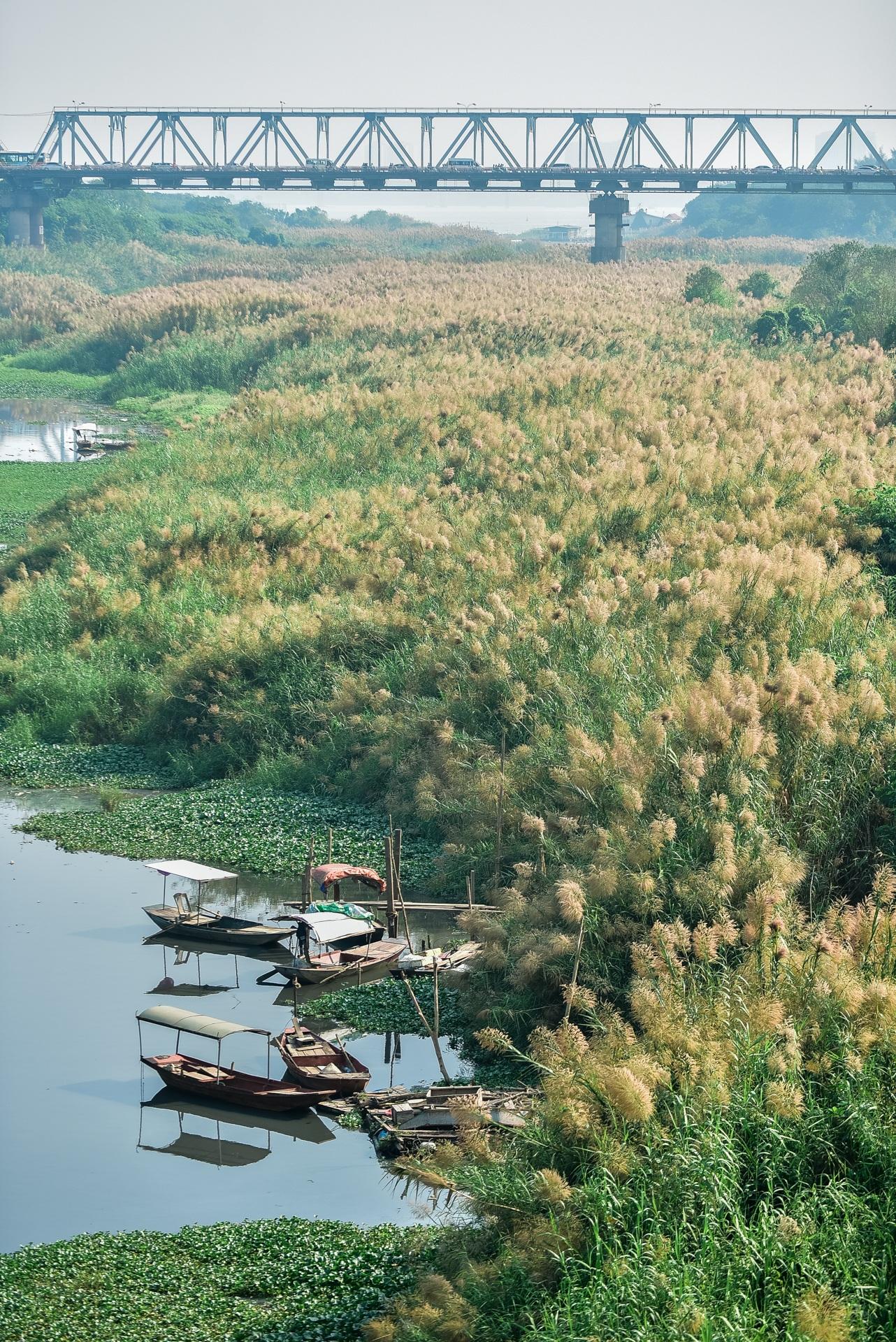 Lạc vào cánh đồng cỏ lau đẹp như xứ sở thần tiên dưới chân cầu Long Biên - 14