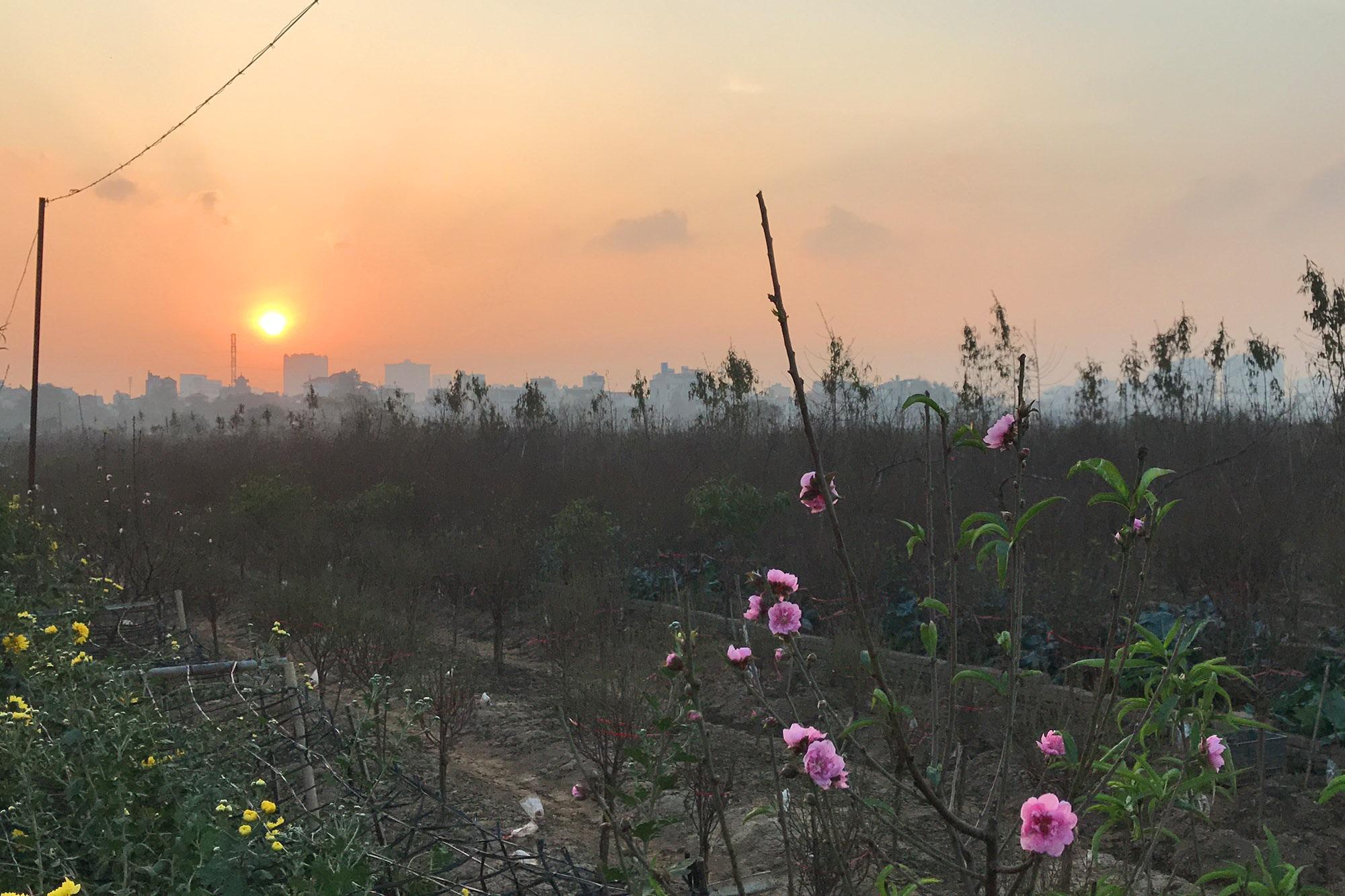 Hoa đào nở sớm khoe sắc đỏ rực vườn đào Nhật Tân - 14