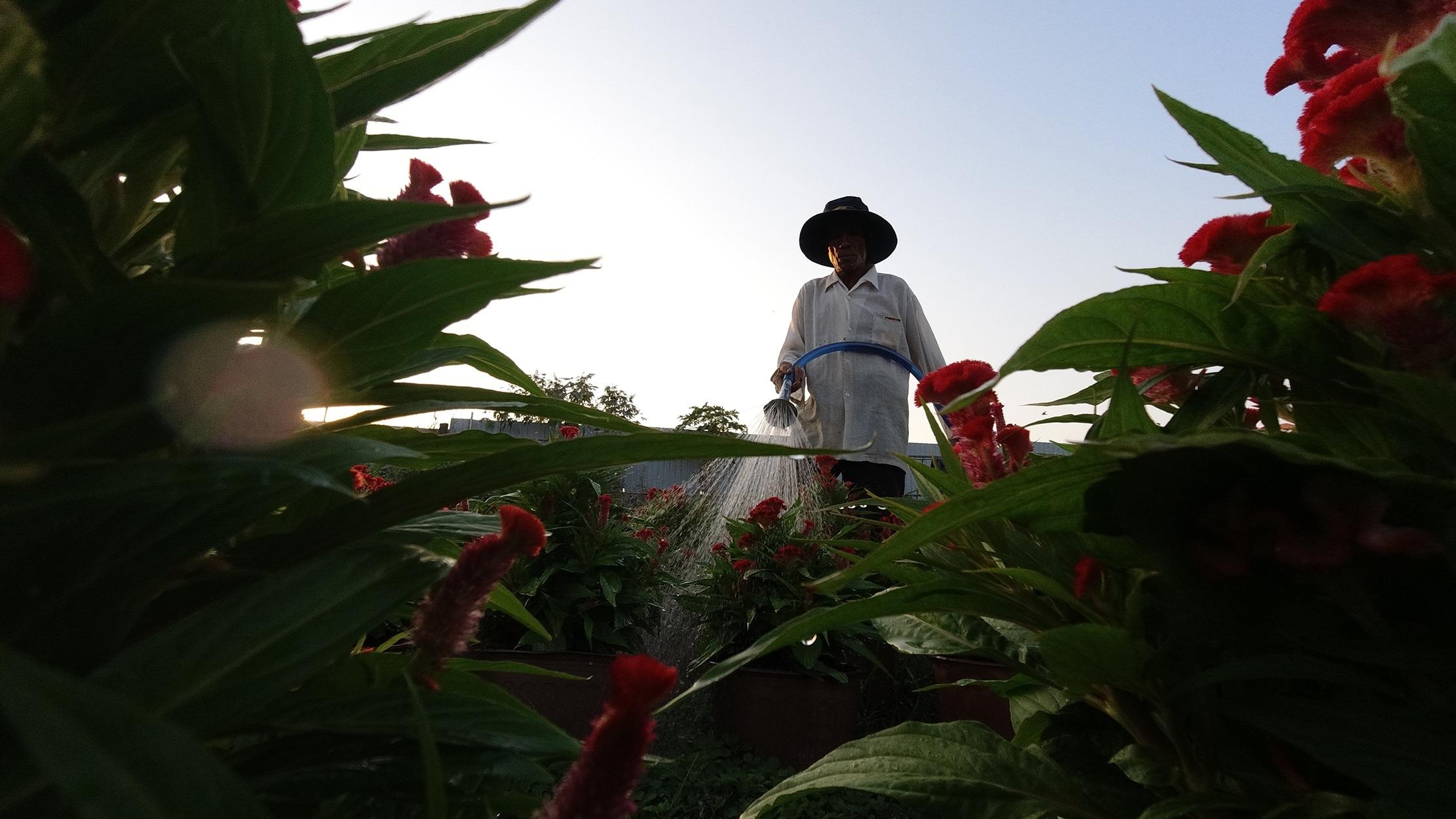 Những ruộng hoa háo hức chờ xuất vườn đón xuân Canh Tý - 3