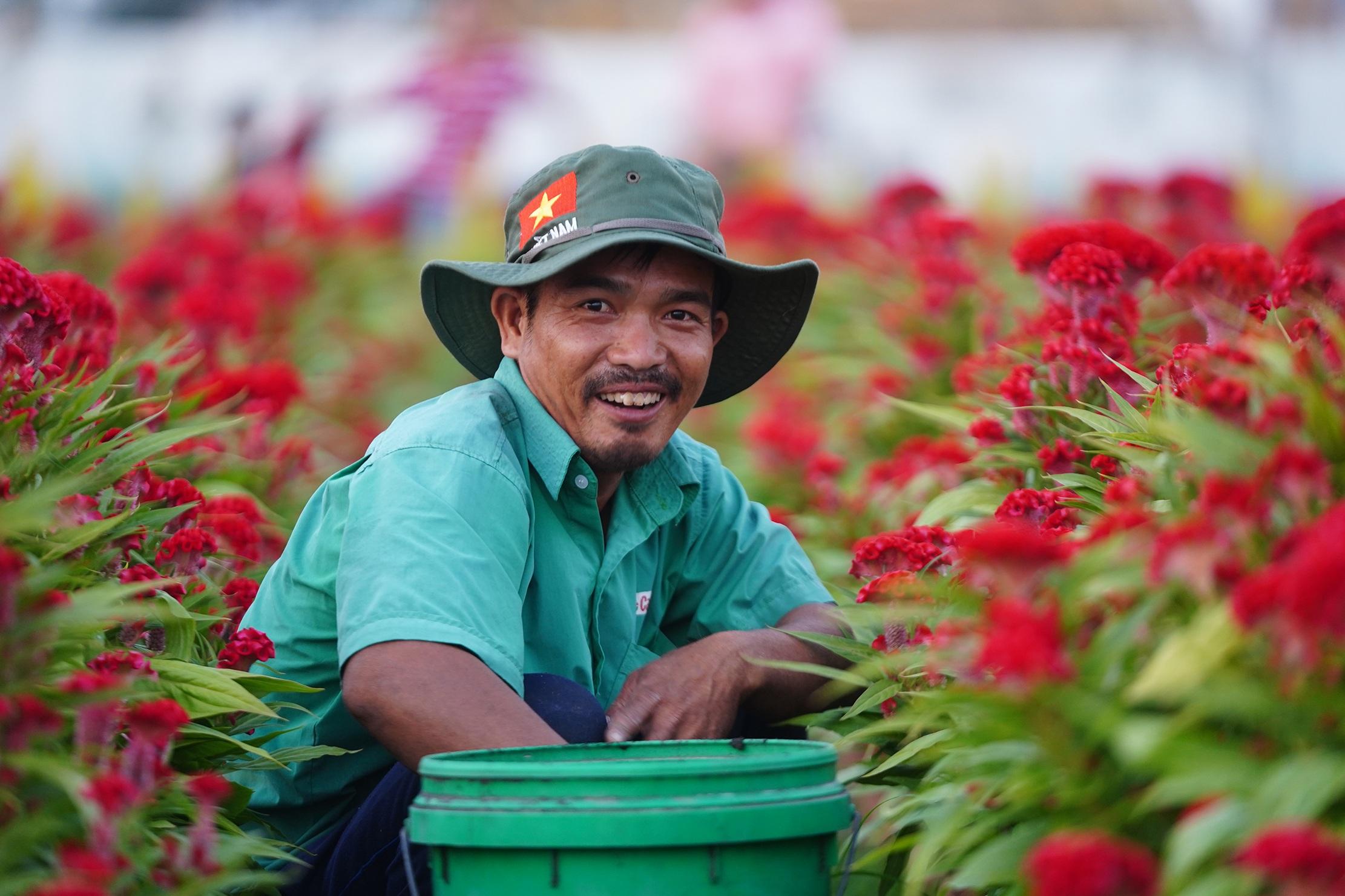 Những ruộng hoa háo hức chờ xuất vườn đón xuân Canh Tý - 15