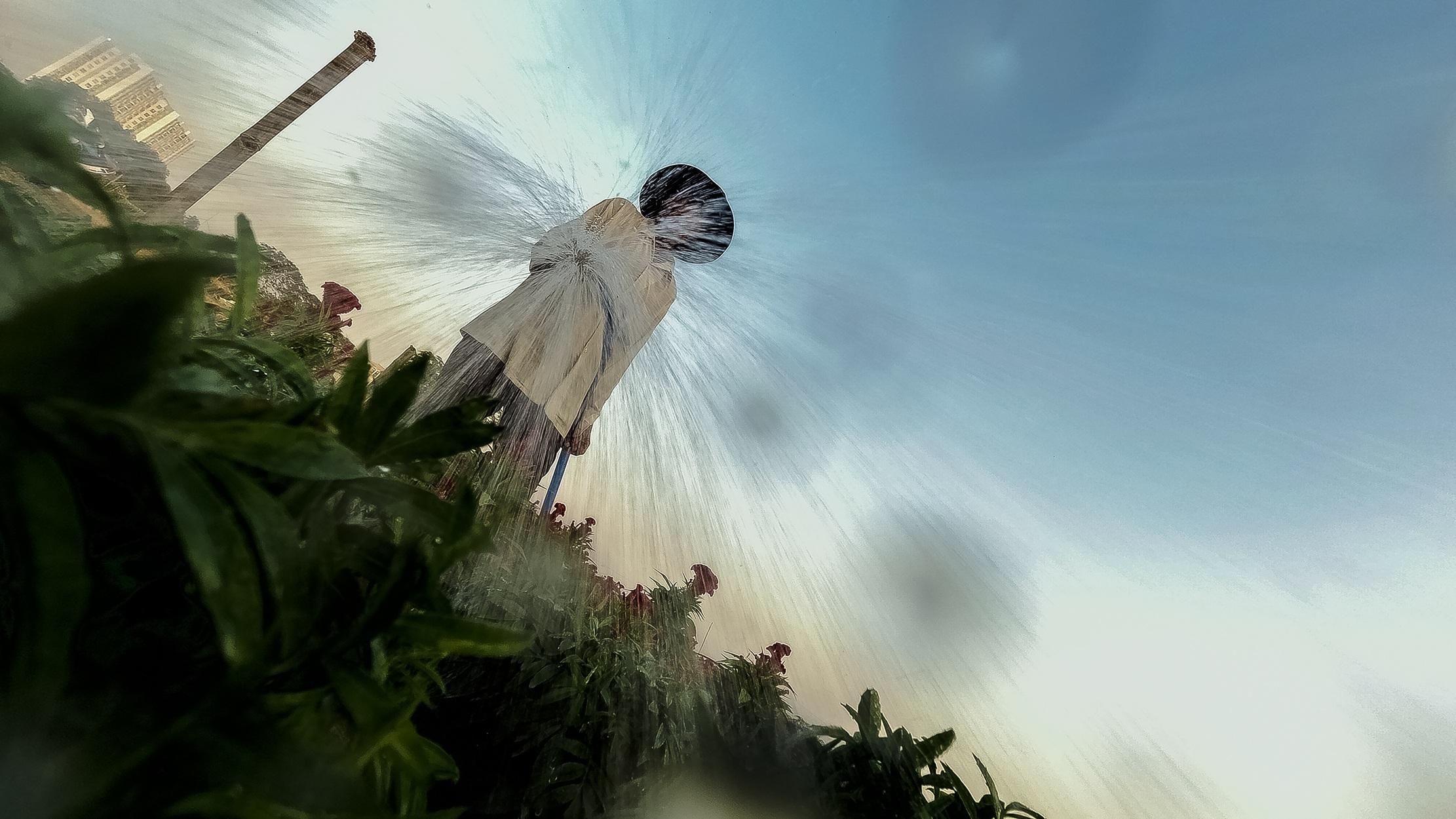 Những ruộng hoa háo hức chờ xuất vườn đón xuân Canh Tý - 5