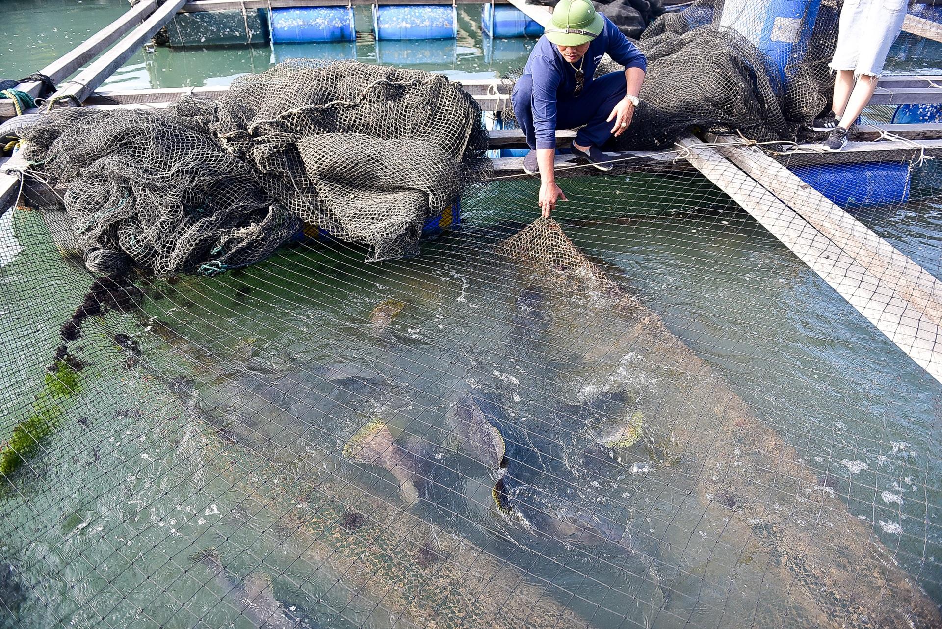 Chuyện lạ tại Quảng Ninh: Cá song mê đánh răng, thích vuốt ve, trò chuyện với người - 16