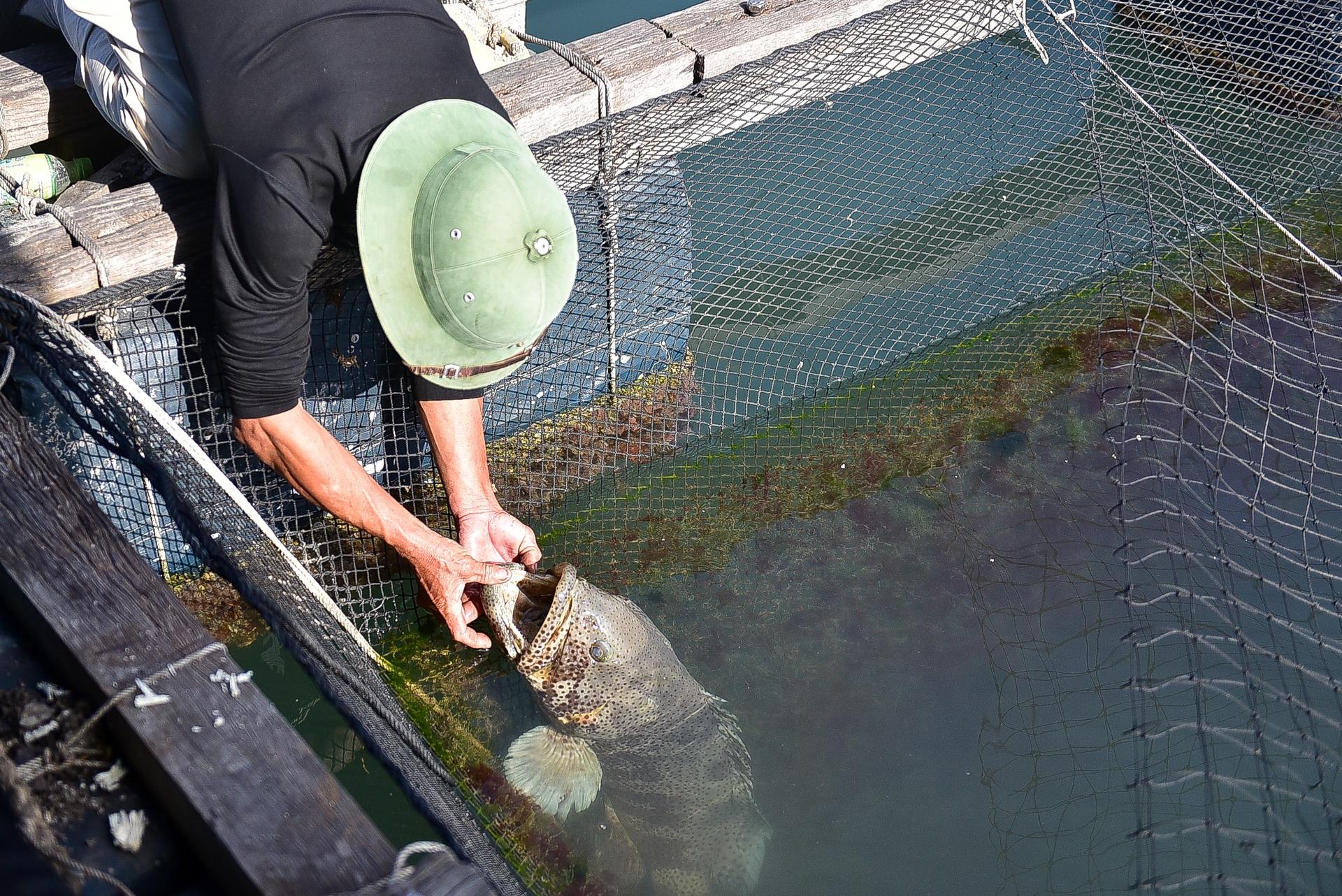 Chuyện lạ tại Quảng Ninh: Cá song mê đánh răng, thích vuốt ve, trò chuyện với người - 4