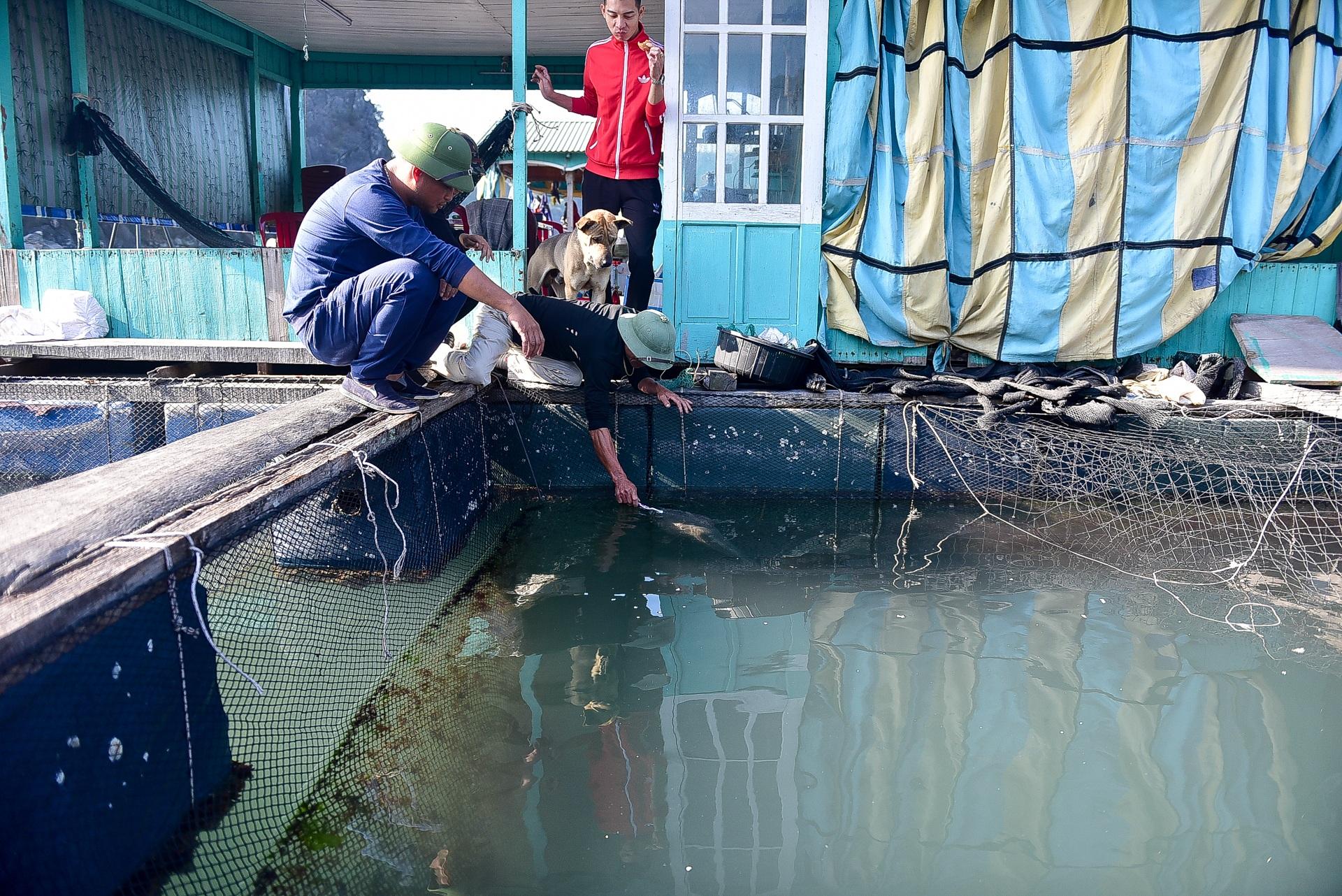 Chuyện lạ tại Quảng Ninh: Cá song mê đánh răng, thích vuốt ve, trò chuyện với người - 2