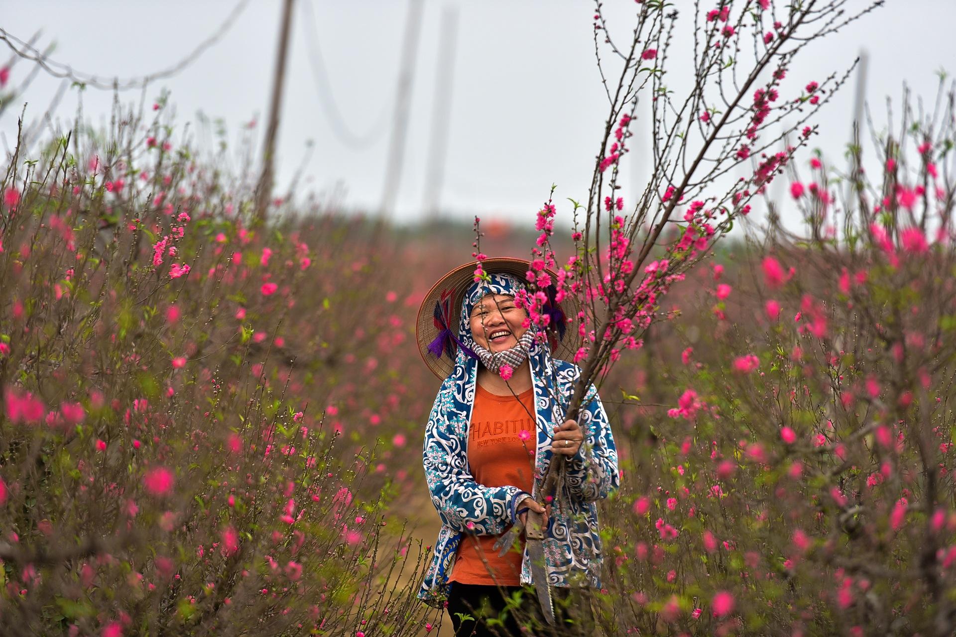 Đào Nhật Tân bung nở, rụng đỏ gốc: Khách kéo nhau chụp ảnh, nông dân thẫn thờ lo trắng tay - 21