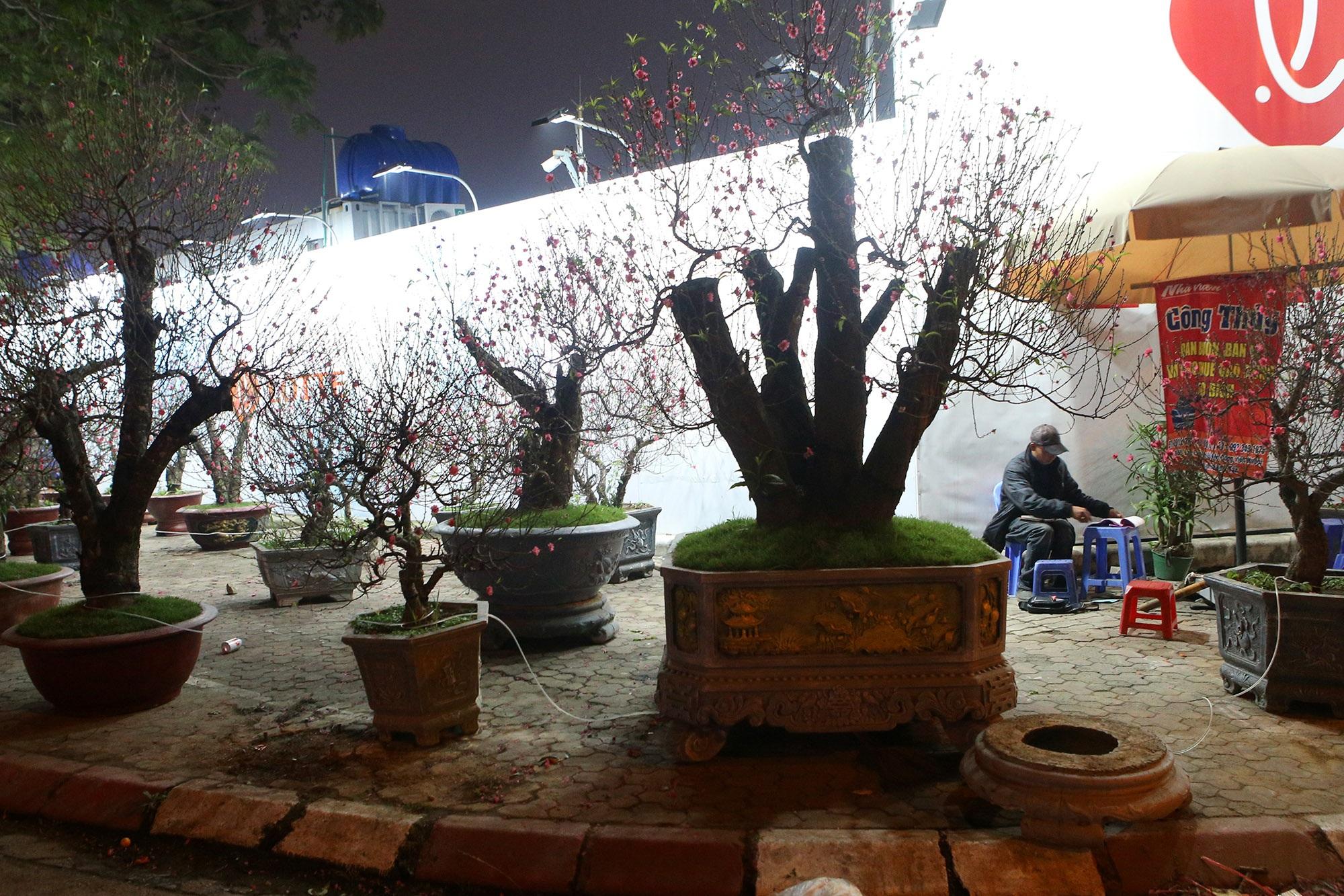 Trắng đêm trông đào Tết trong giá lạnh - 12