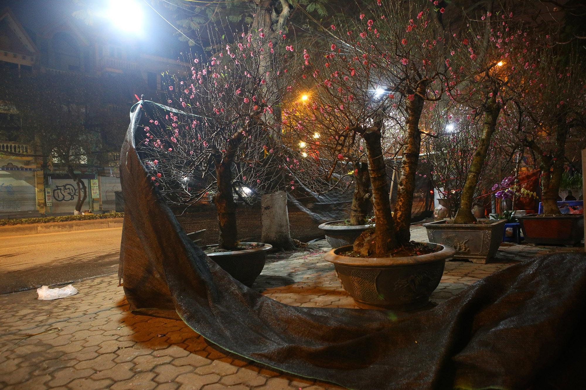 Trắng đêm trông đào Tết trong giá lạnh - 6