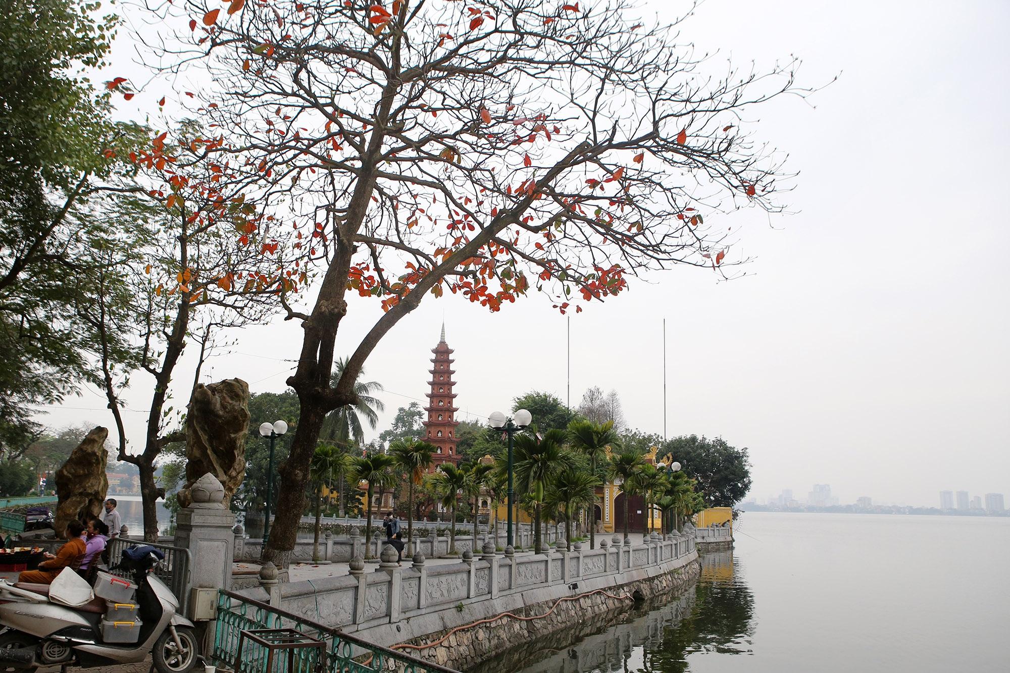 Hà Nội: Ngắm hồ Tây đẹp lãng mạn vào mùa cây thay lá - 12