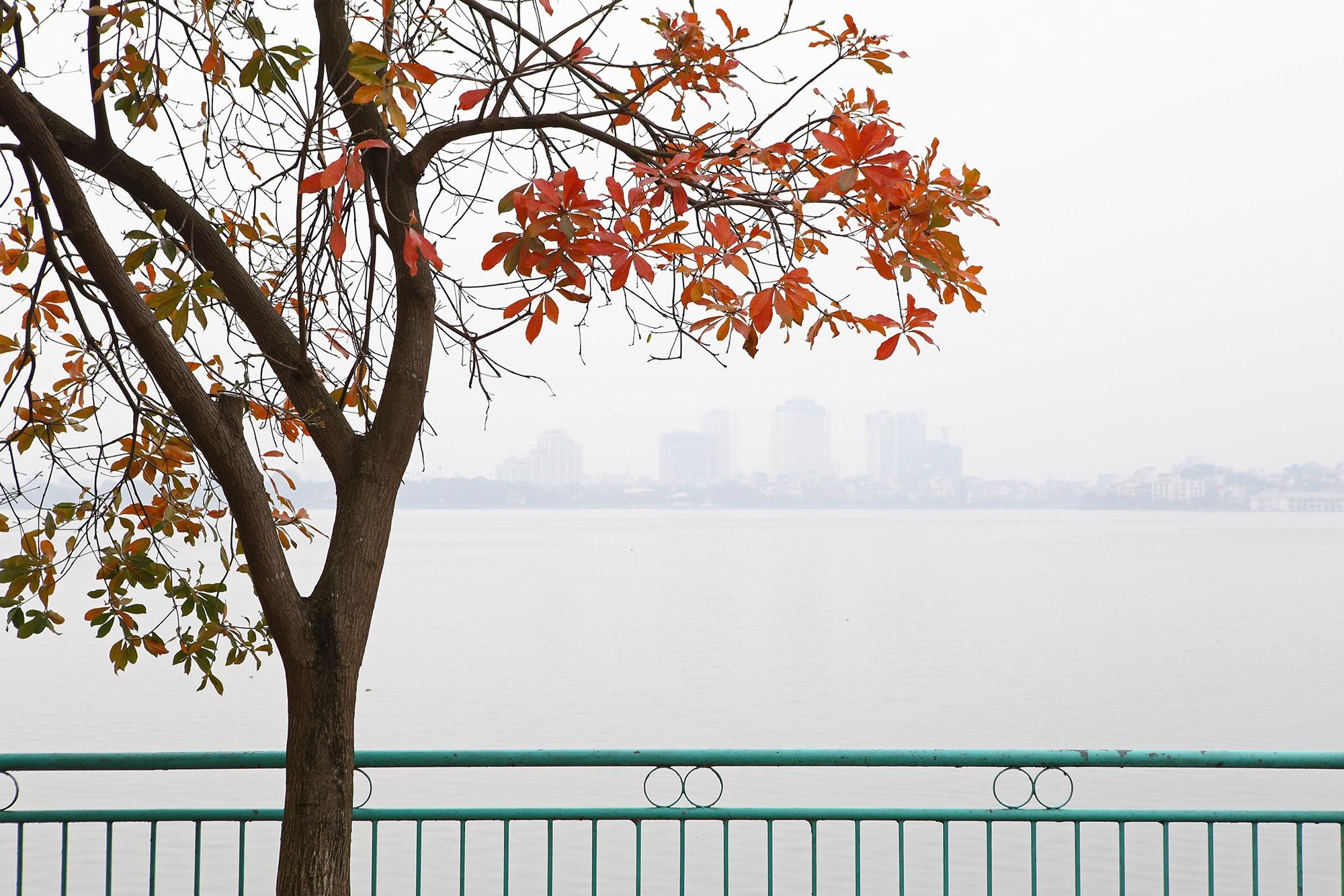 Hà Nội: Ngắm hồ Tây đẹp lãng mạn vào mùa cây thay lá - 13
