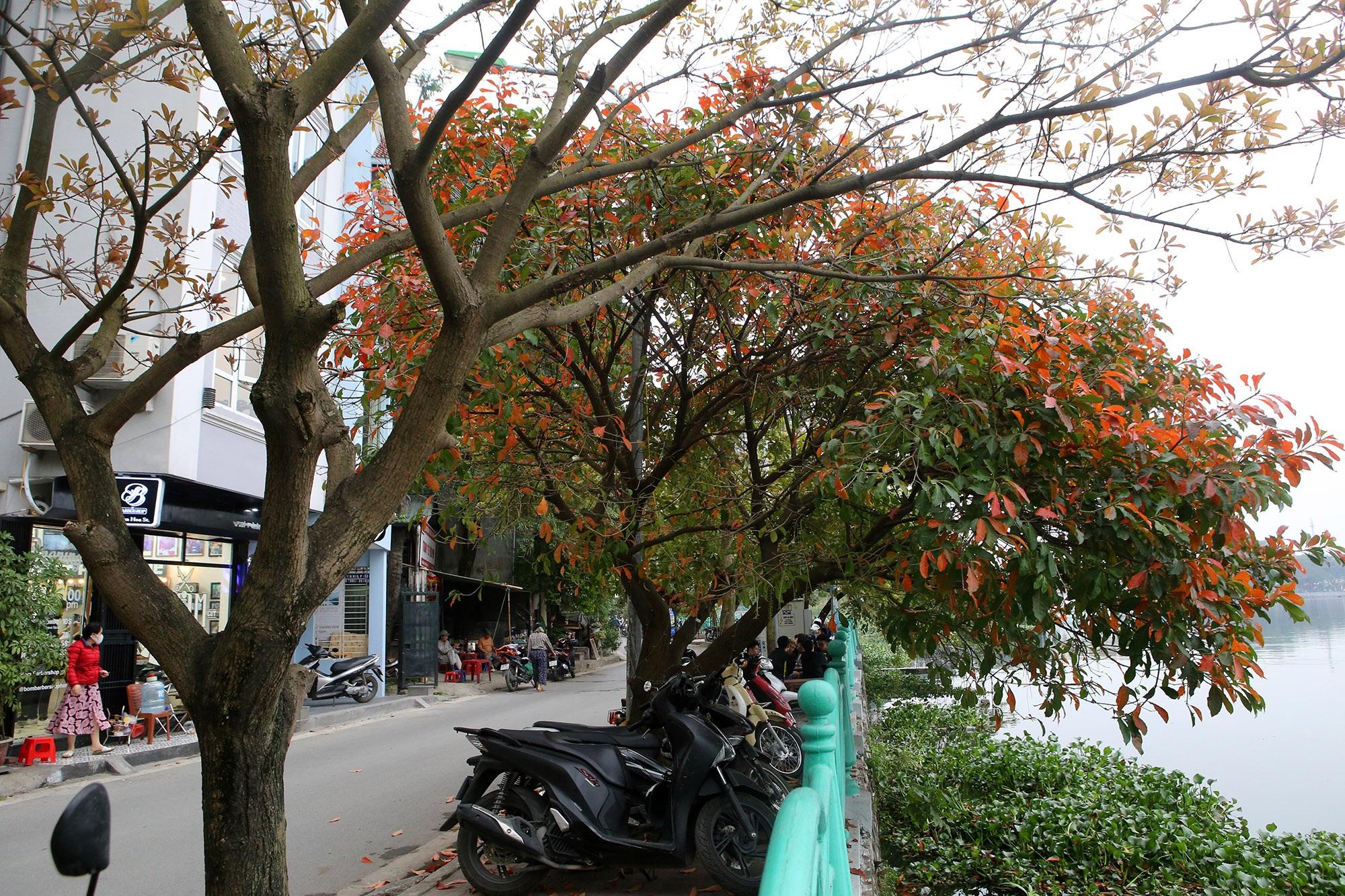 Hà Nội: Ngắm hồ Tây đẹp lãng mạn vào mùa cây thay lá - 14