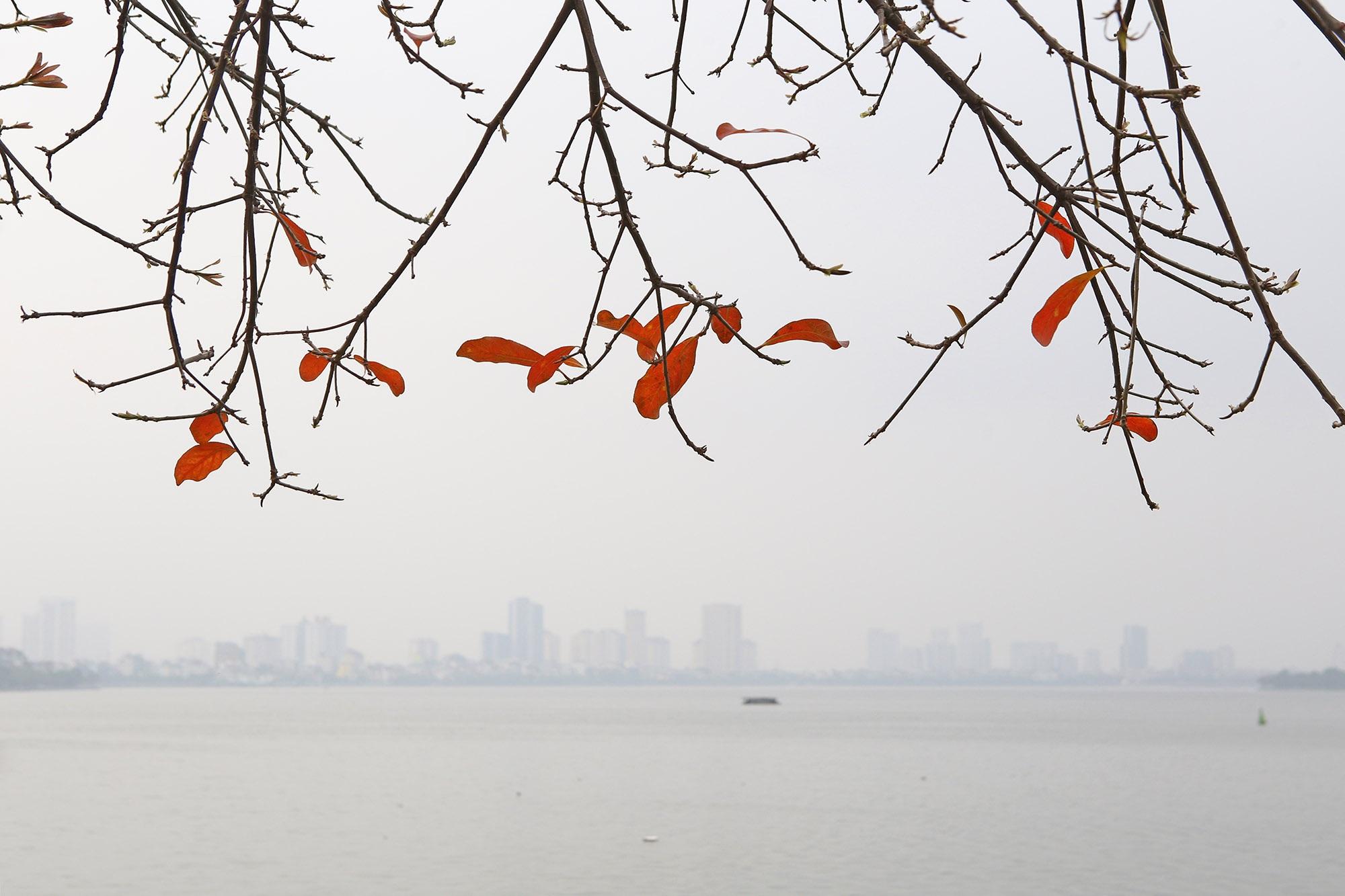 Hà Nội: Ngắm hồ Tây đẹp lãng mạn vào mùa cây thay lá - 2